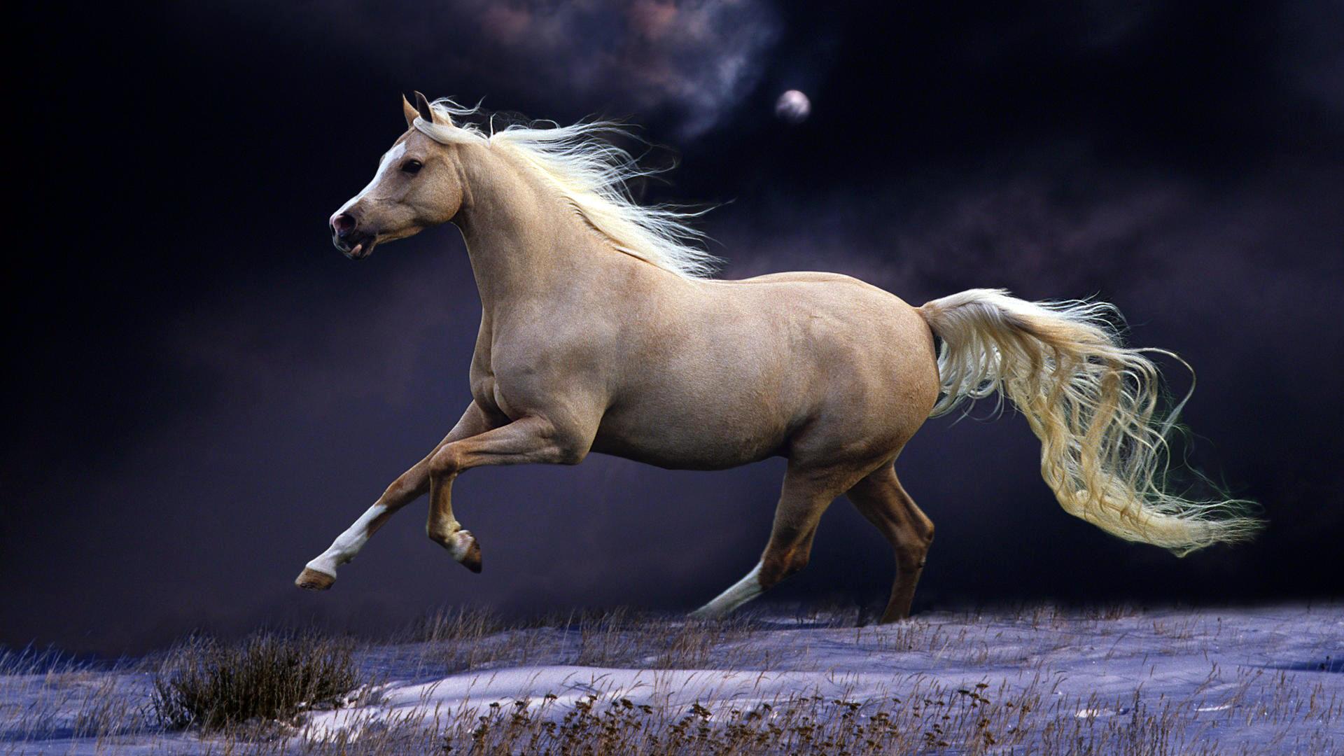 Для девочек, лошади картинки обои