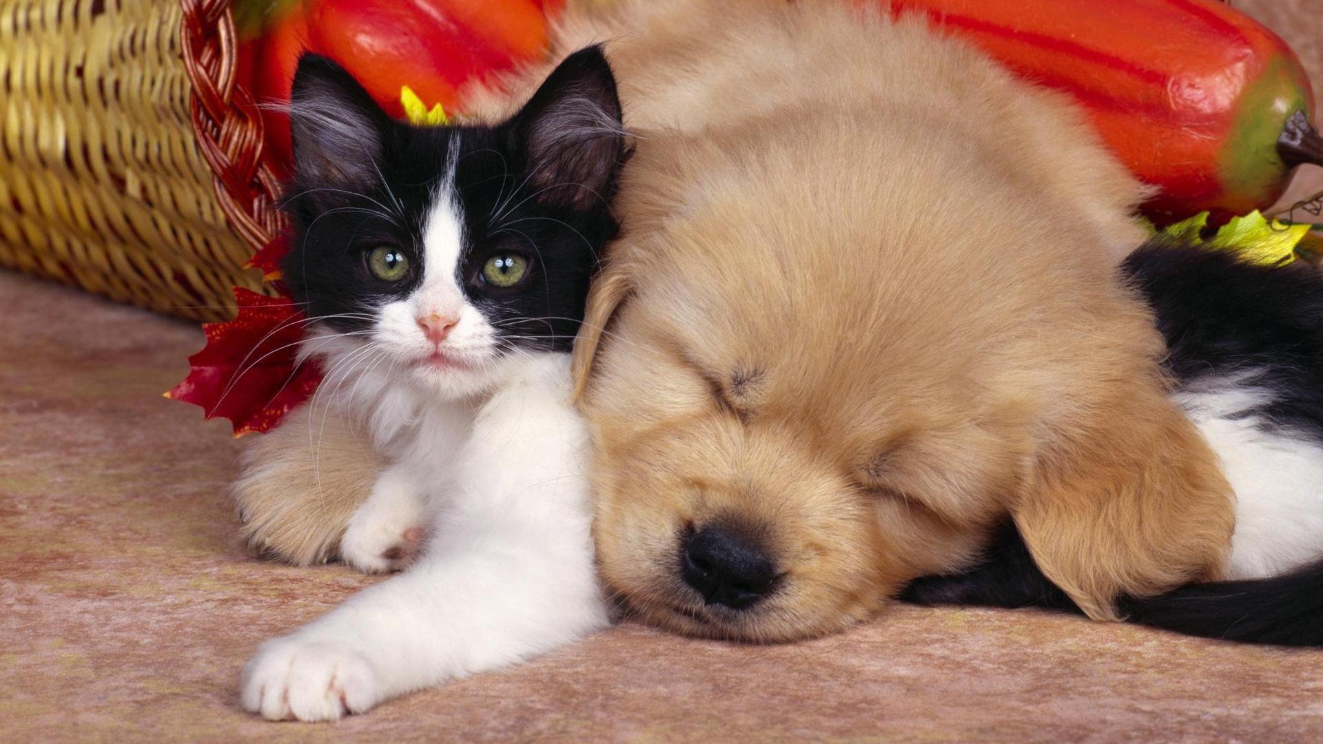 милые картинки про щенят и котят пять официальных