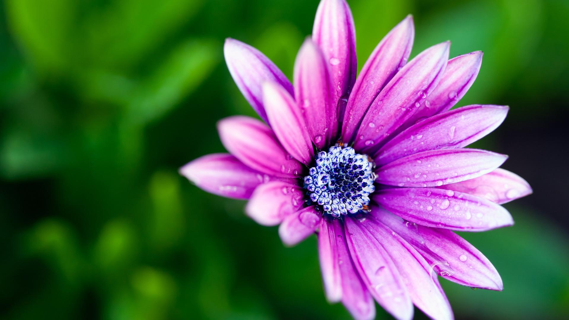 Очень красивые цветок картинки