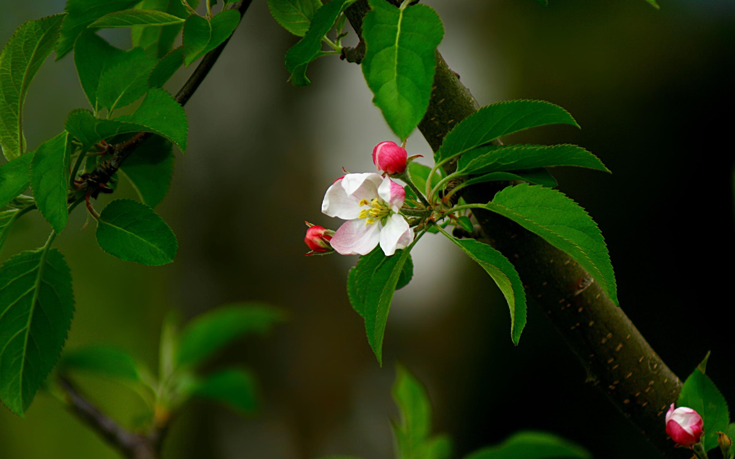 водитель цветы яблоки листья картинки тому так можно