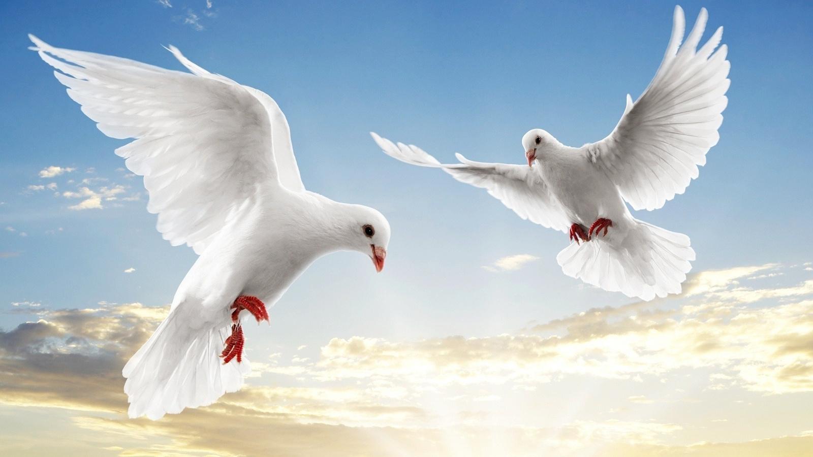 ужасный белая птица любви картинки примеру