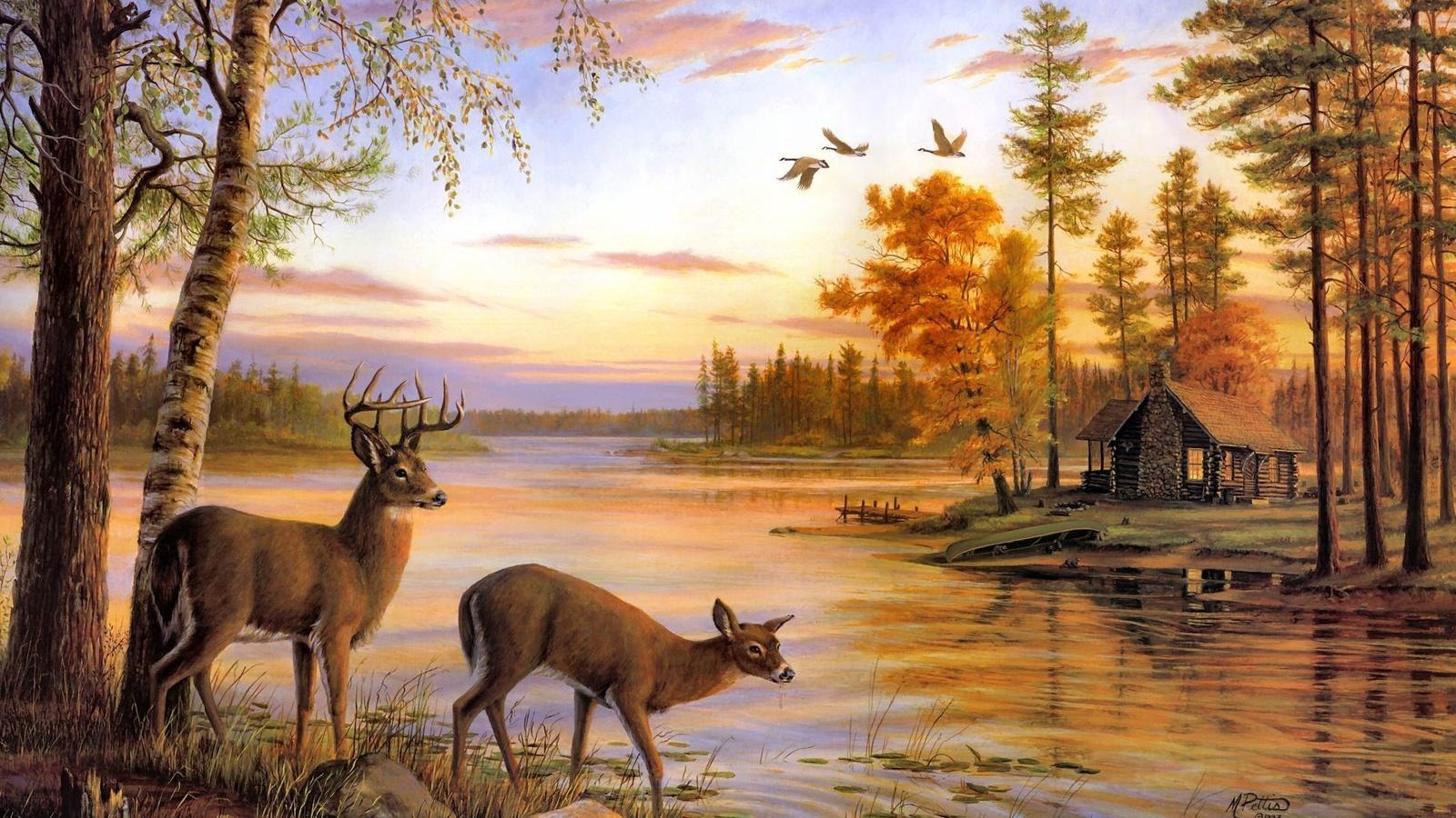 Открытки животных и природа, для музчин