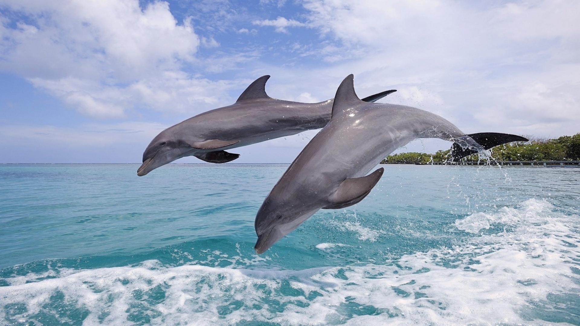 Видео, картинки с морем и дельфинами