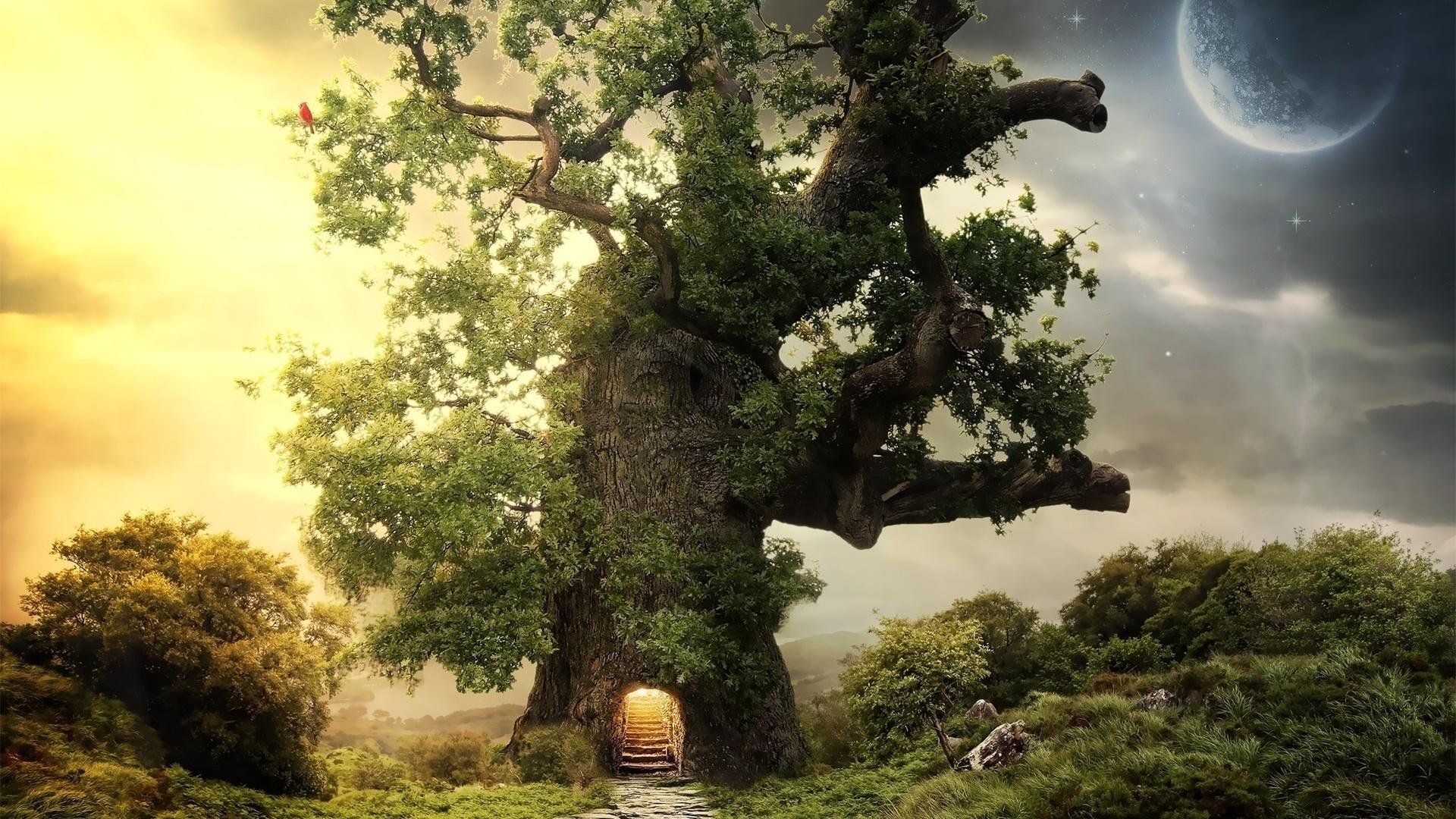 волшебное дерево картинки шпиц
