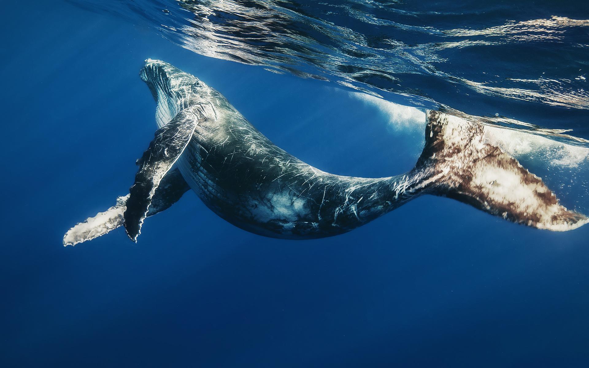 Картинки о синих китах