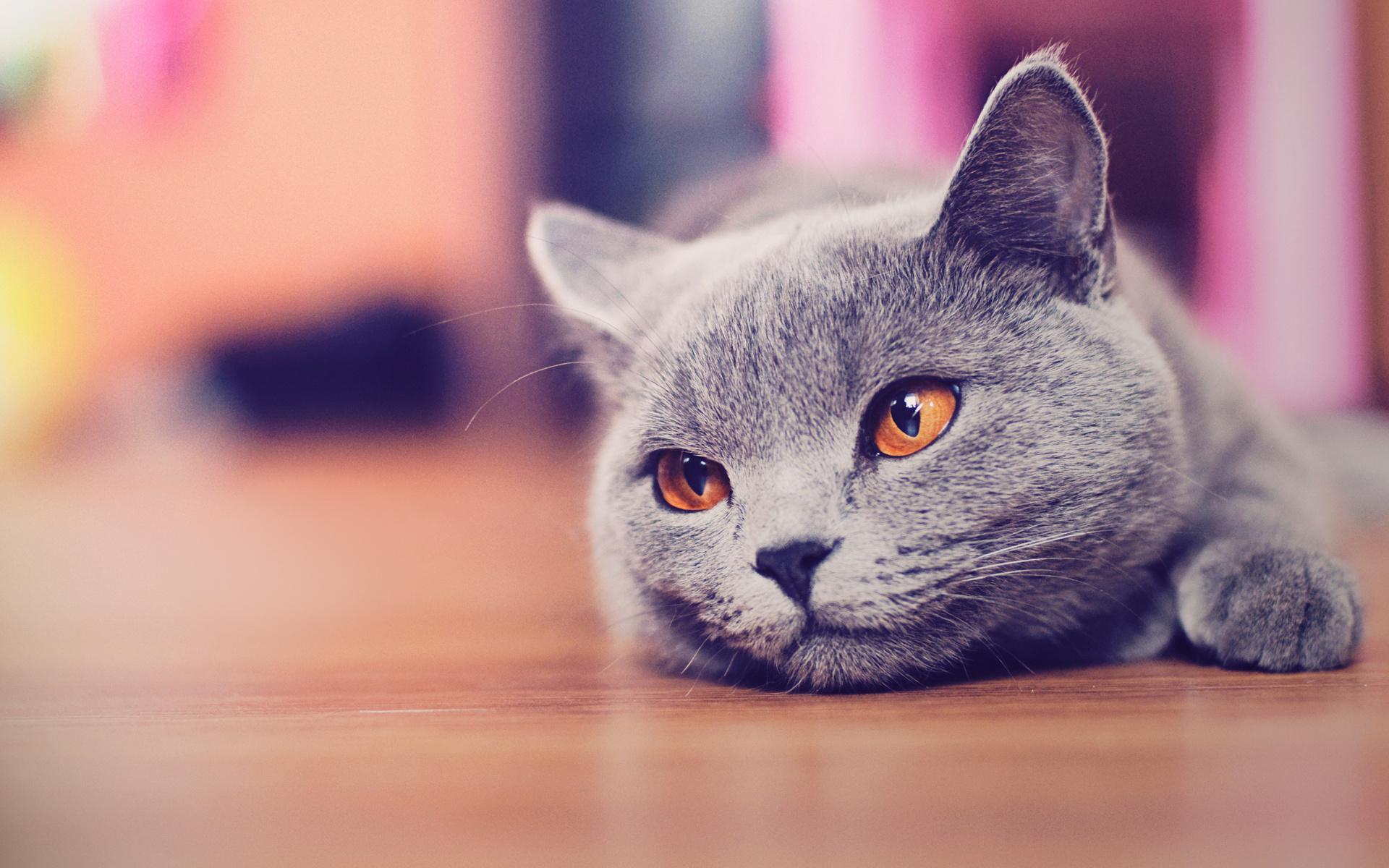Картинки милые котята маме семена
