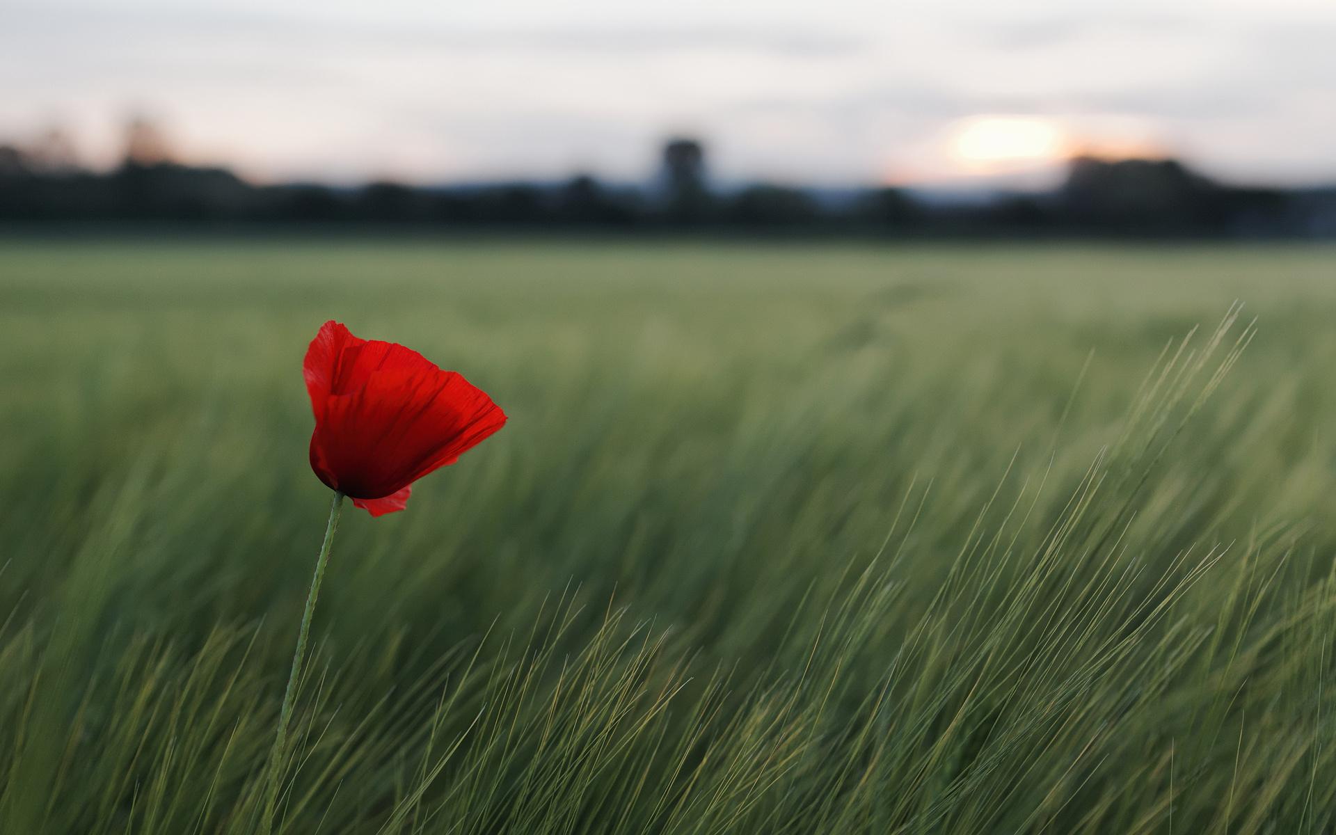 цветы картинка одинокая нежная мягкость