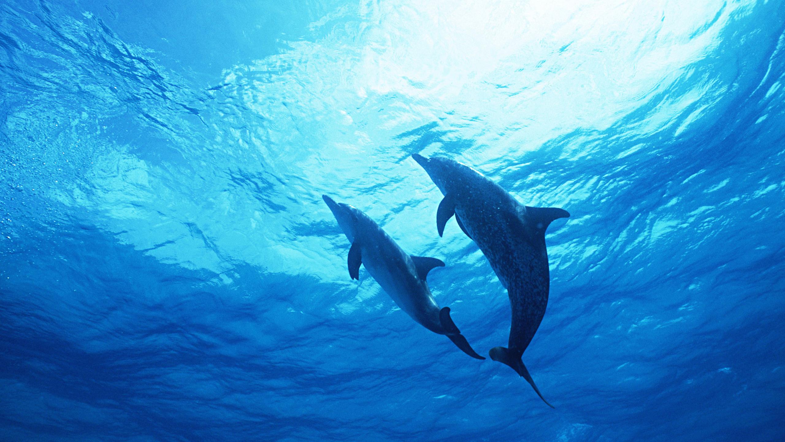 картинки на рабочий стол вода дельфины смог