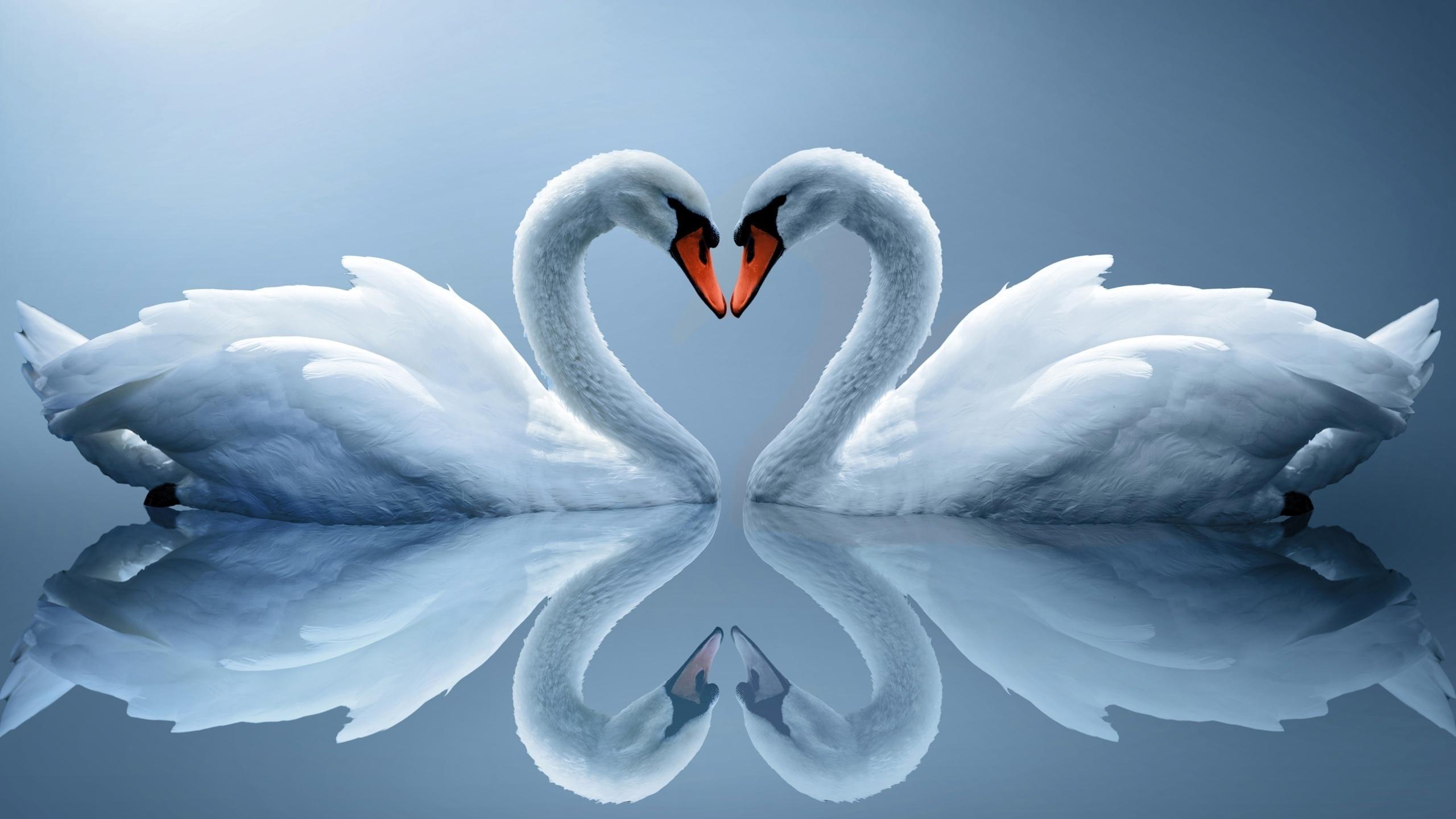 свечи лебеди картинка сами