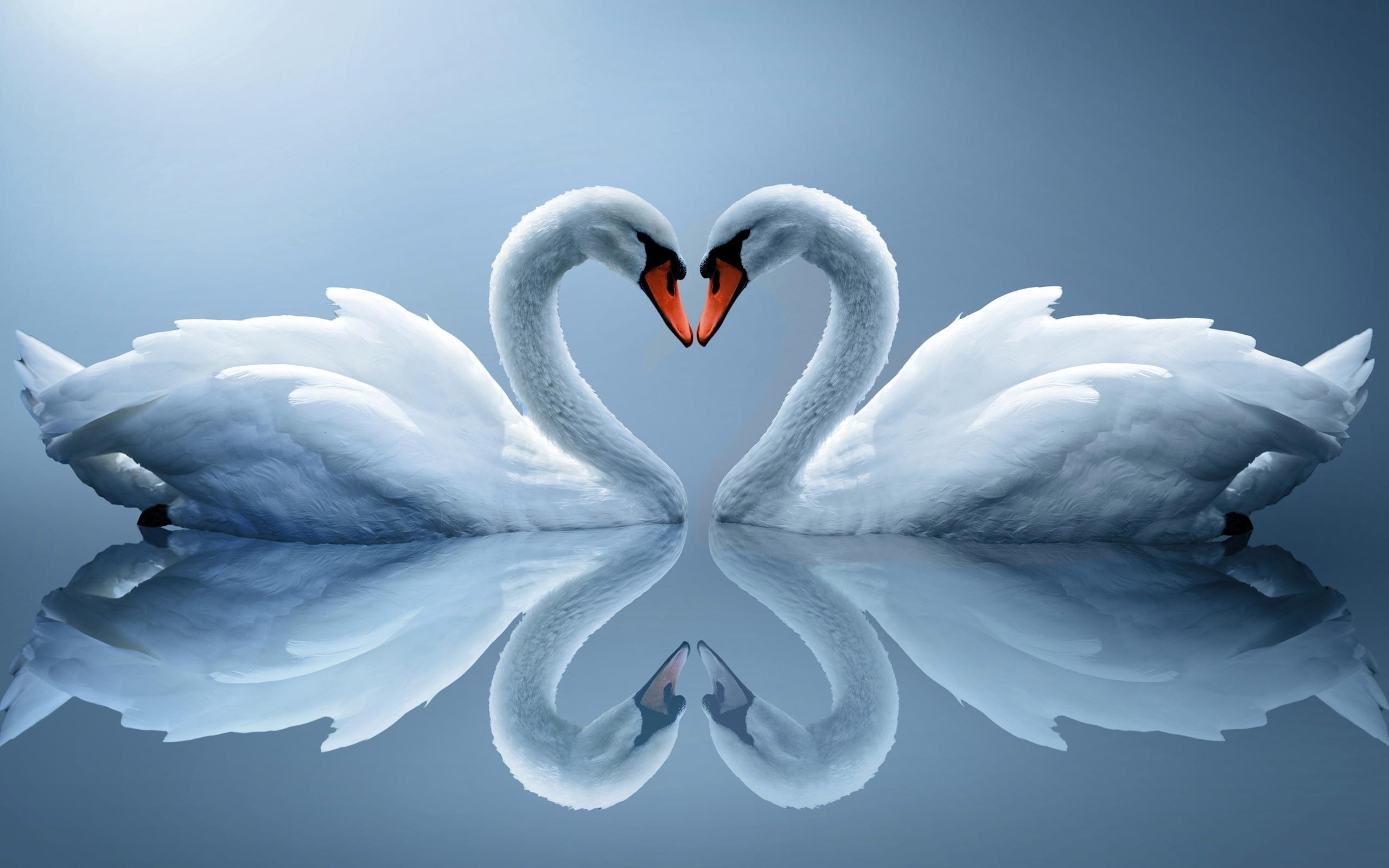 Счастья открытках, открытки красивые с лебедями