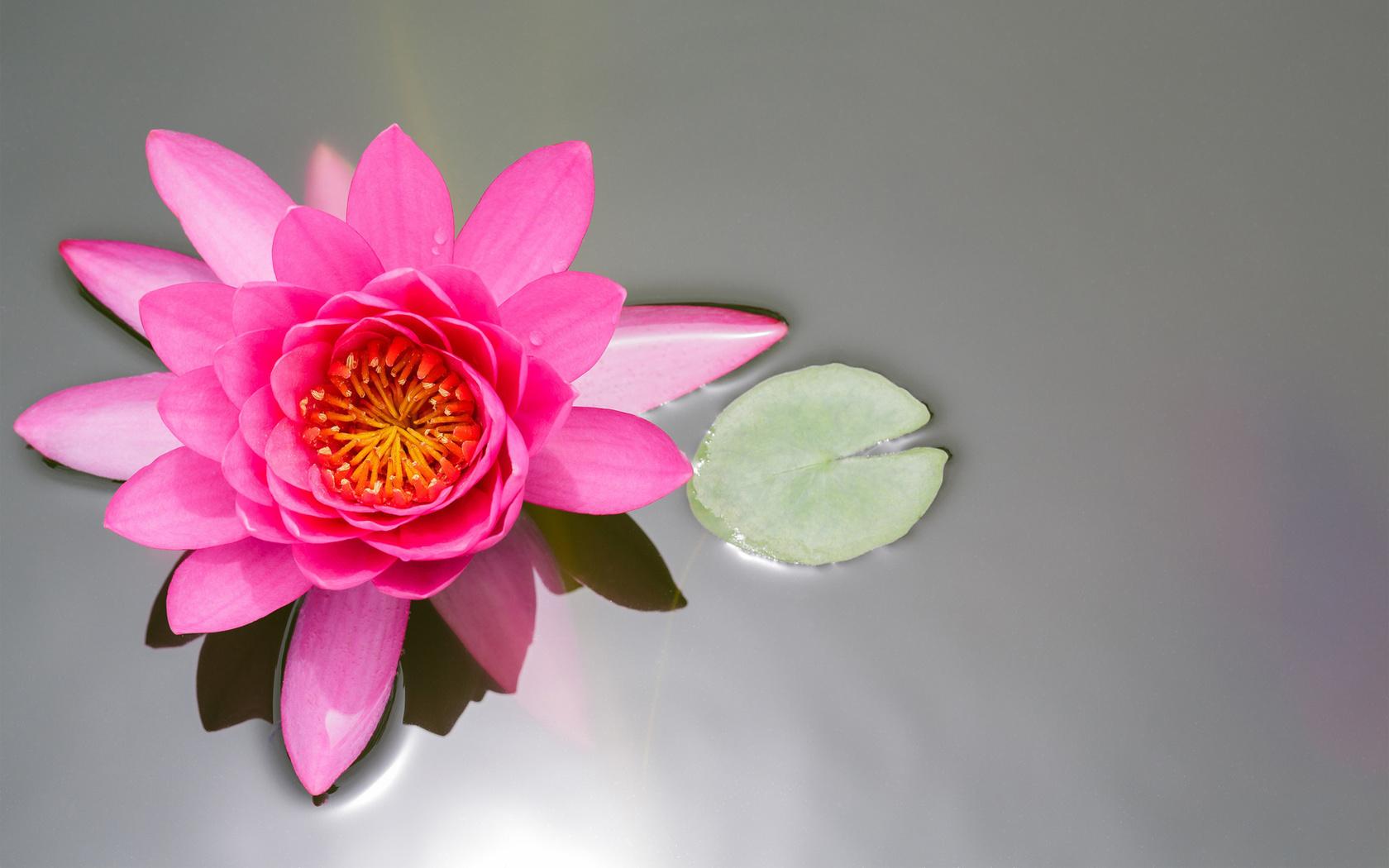 Открытку своими, открытки цветок лотос из