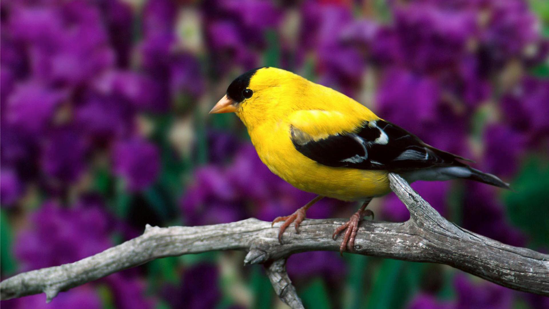 Посмотреть картинки птиц