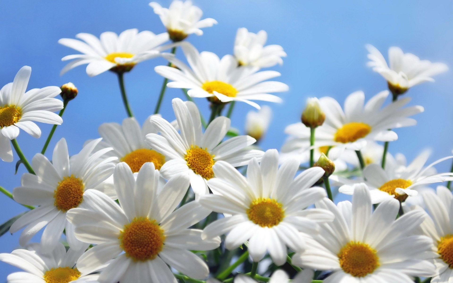 Фотографии красивые цветы