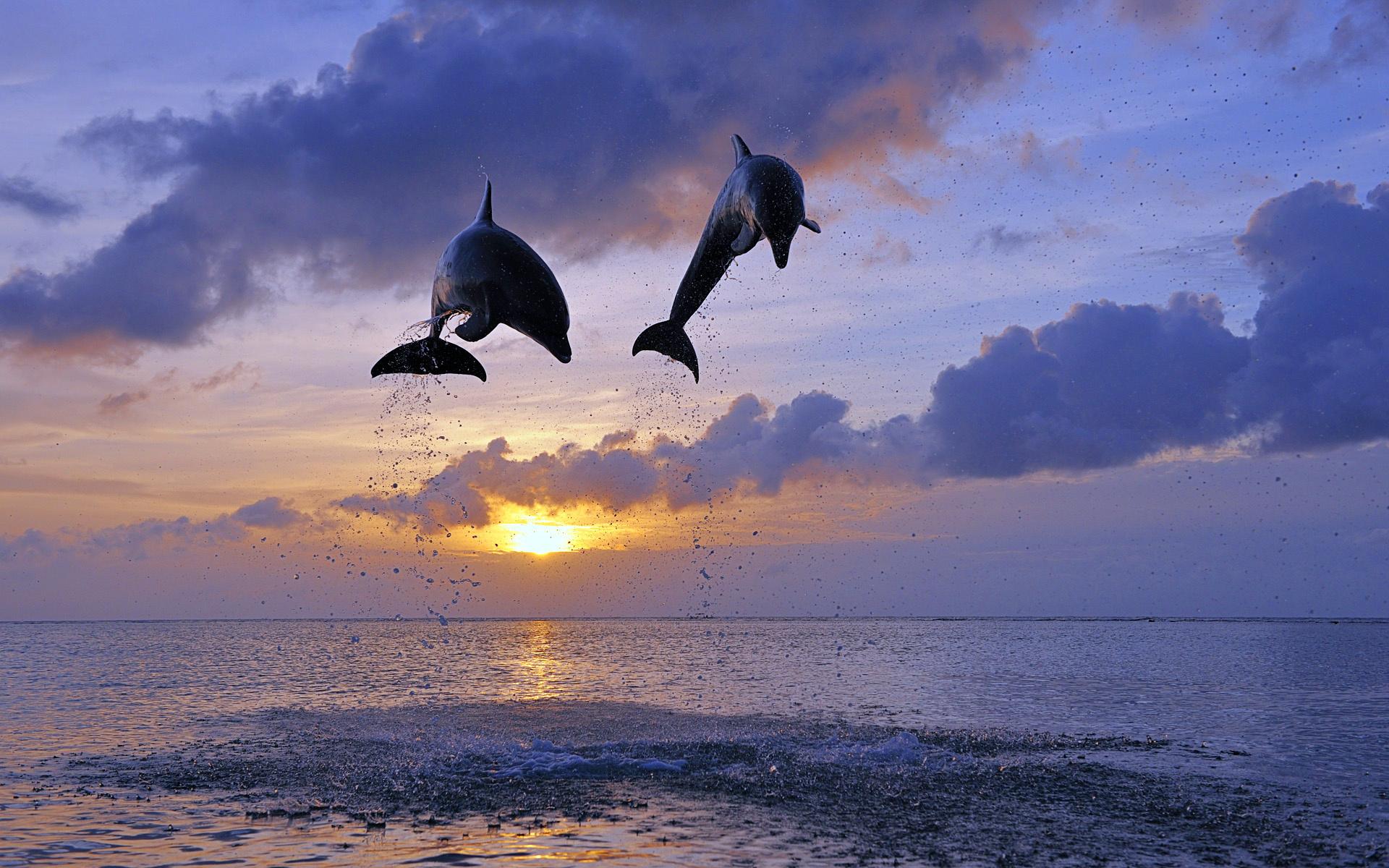 дельфин утро картинки был последним объектом