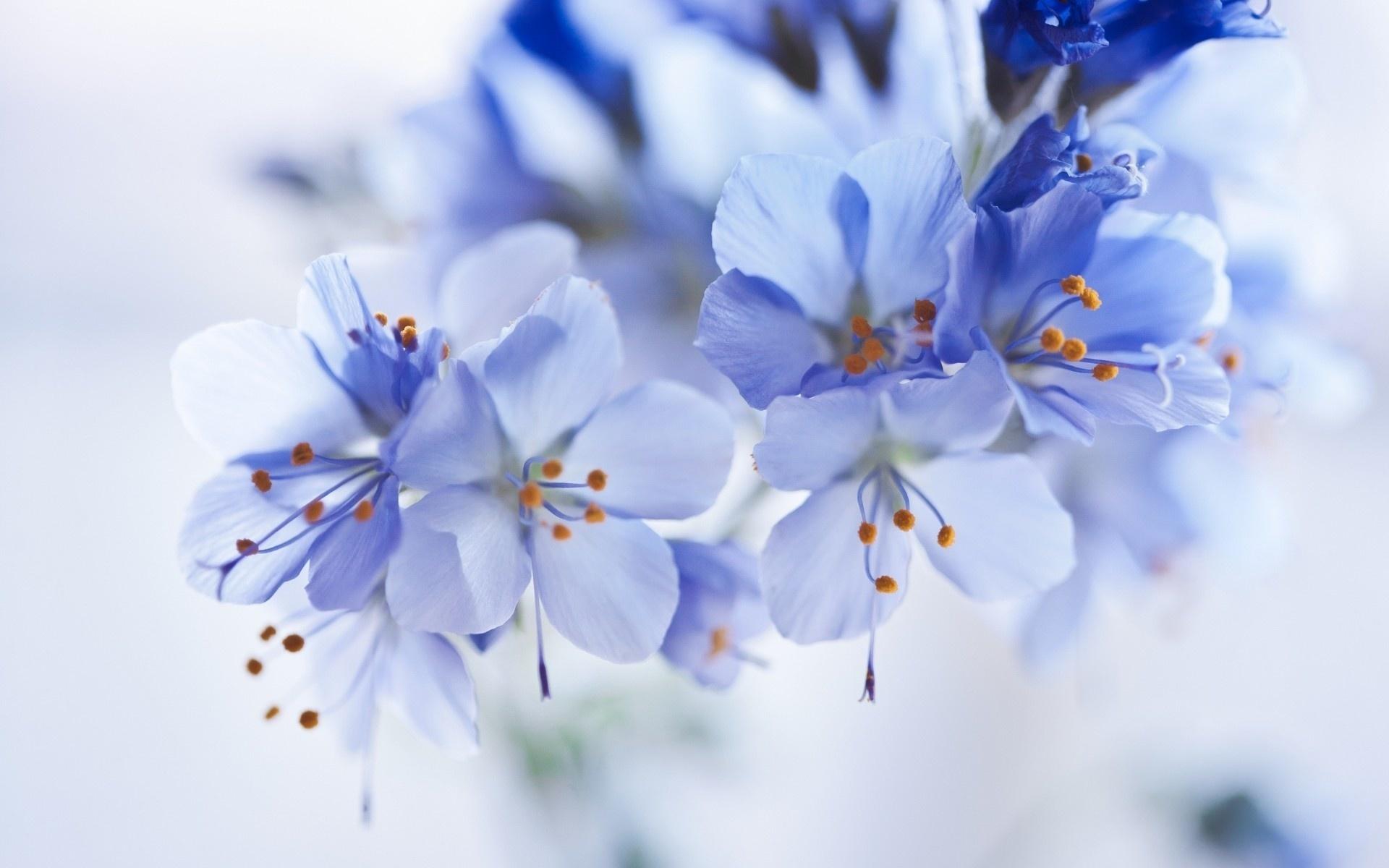 Картинки цветы нежные красивые, открытки как