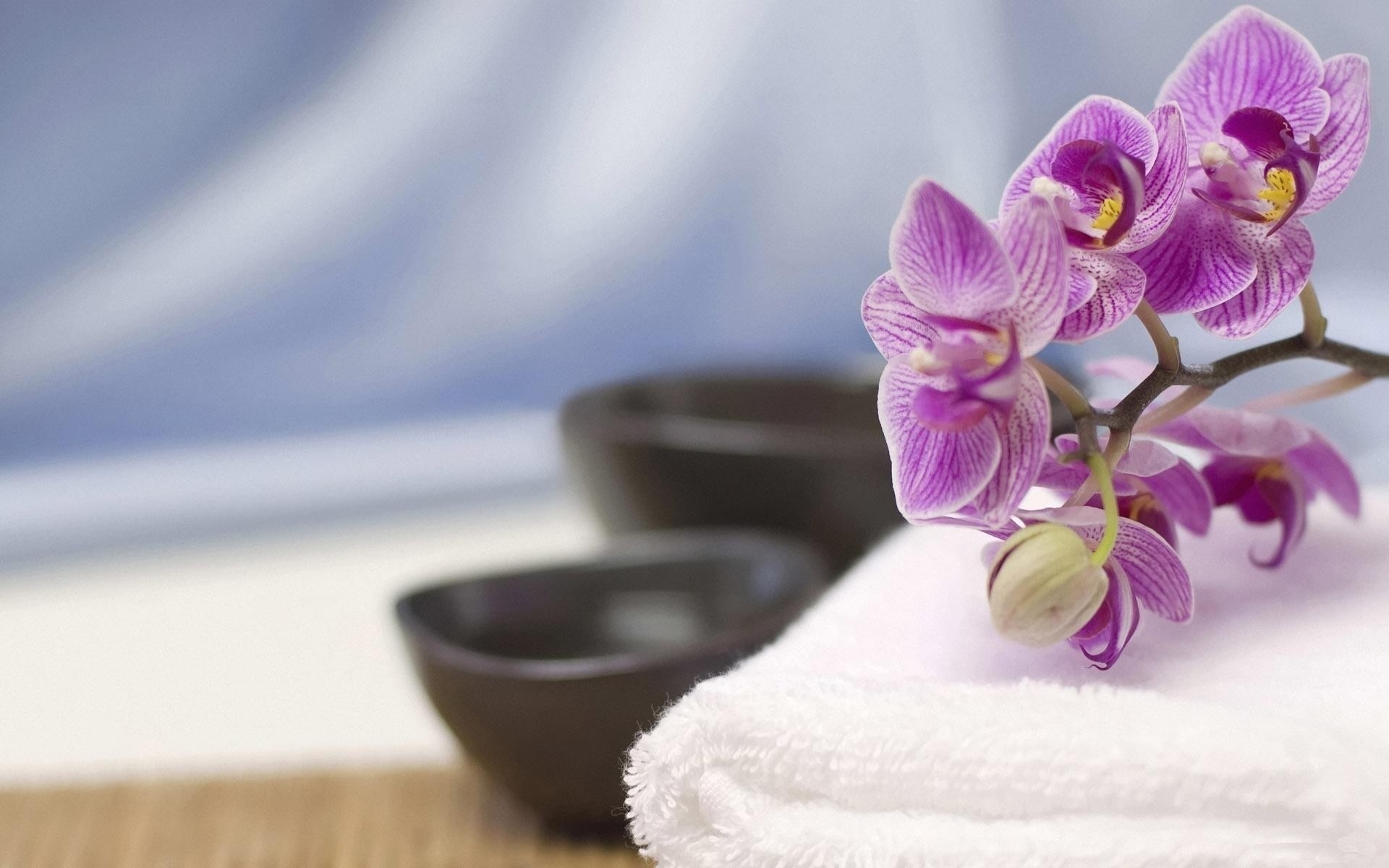 орхидея картинки спа