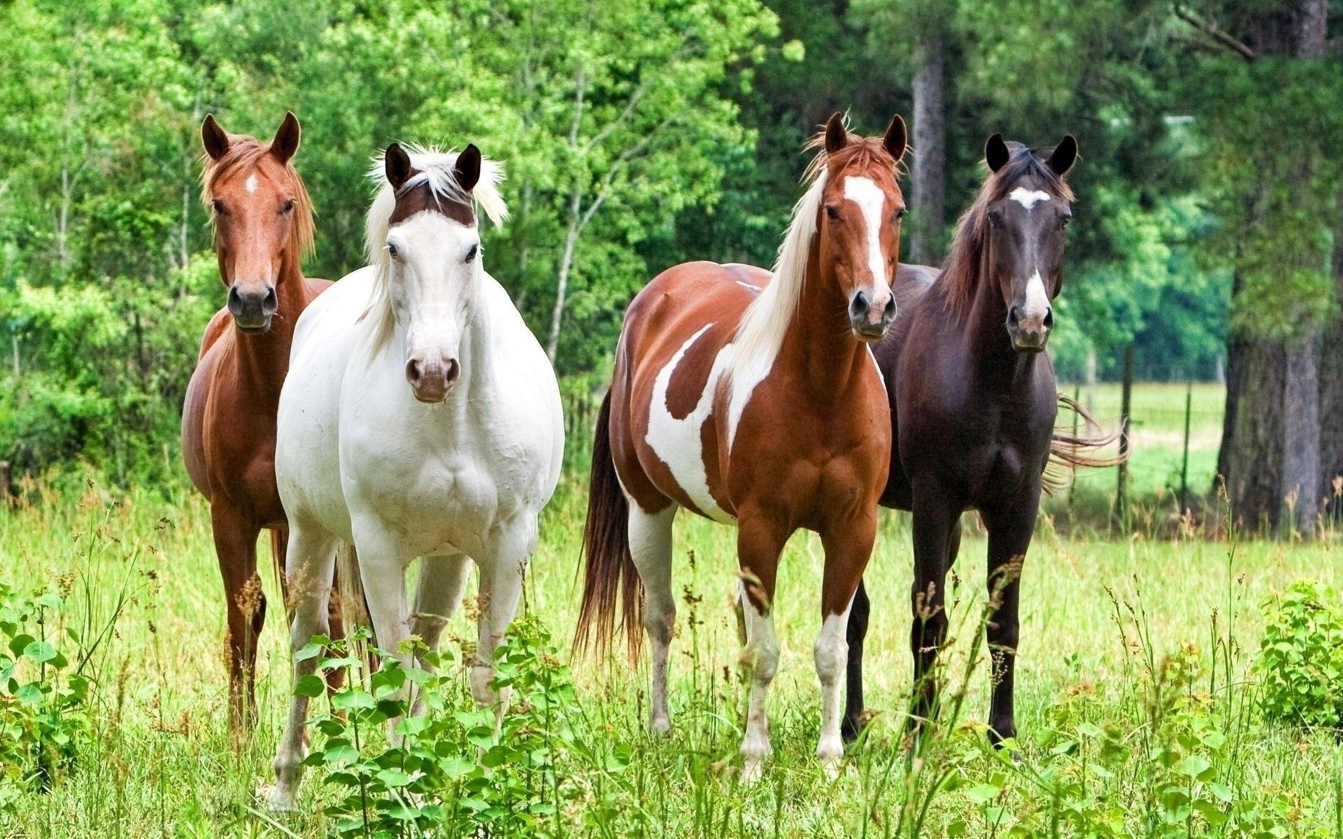 картинки с тремя лошадьми чувствовал