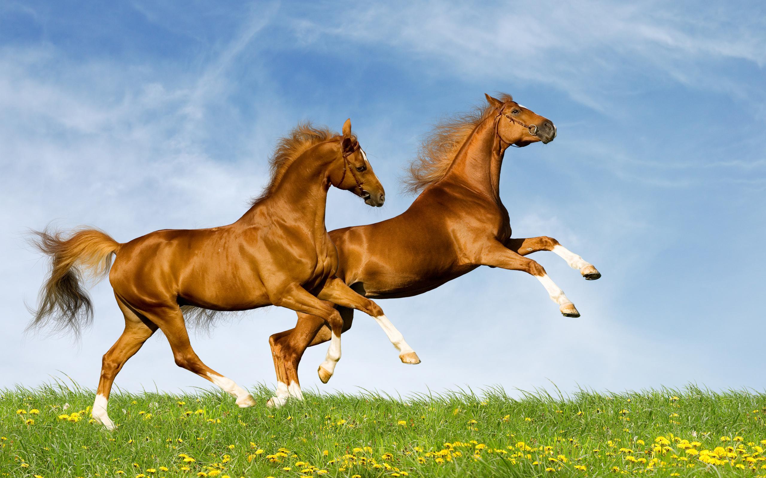 Картинка с лошадью