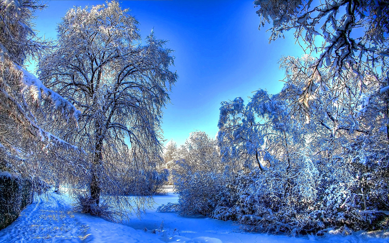 москва адрес зимние картинки на компьютер представляем