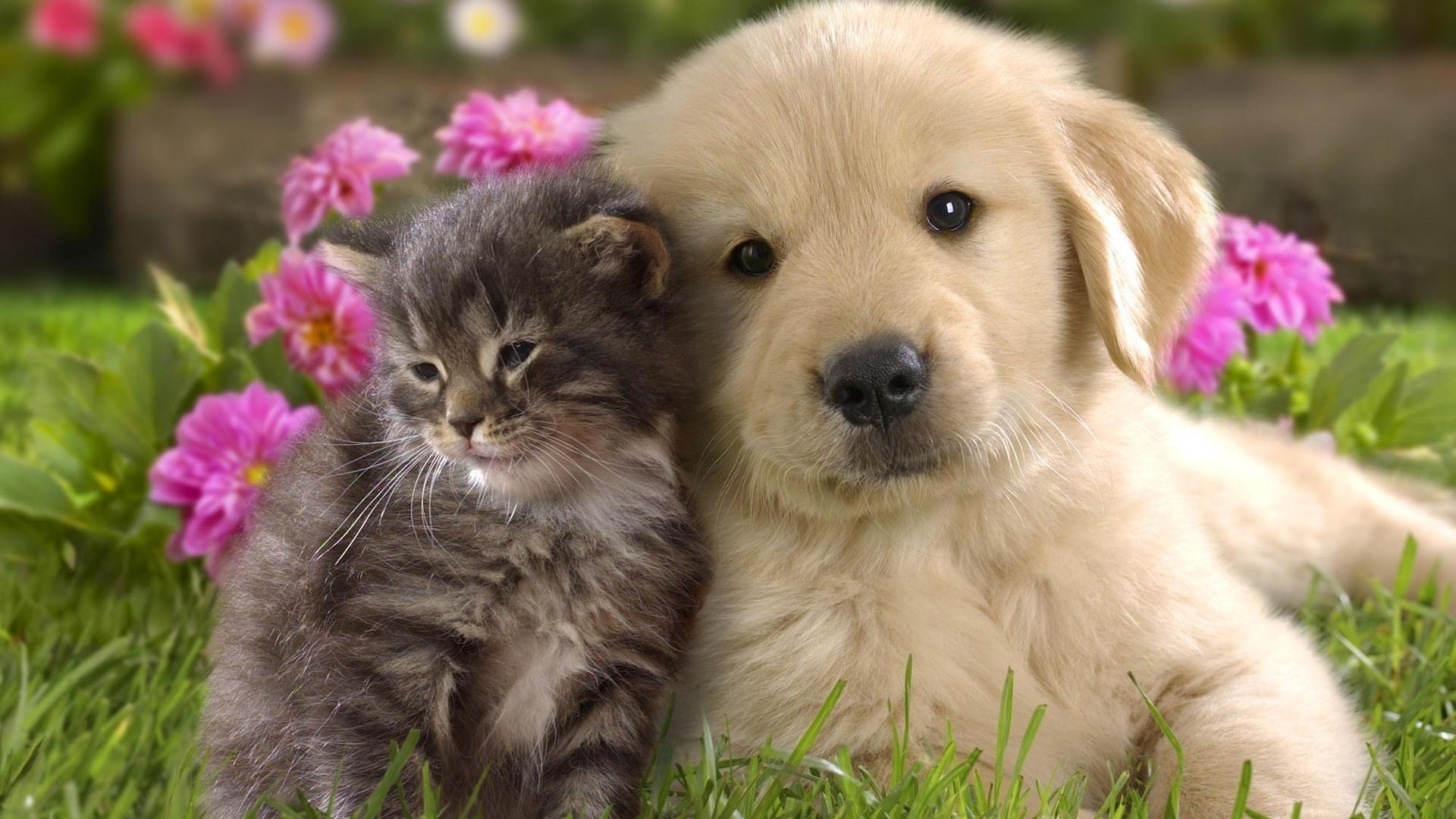 картинки животных красивые и милые