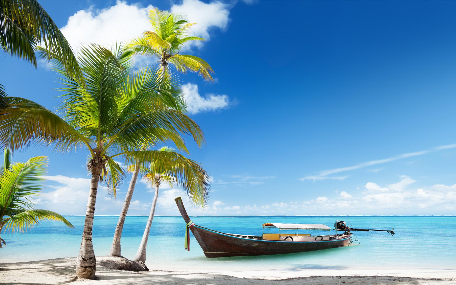 Картинка с океаном и пальмой, гифки сверхъестественное