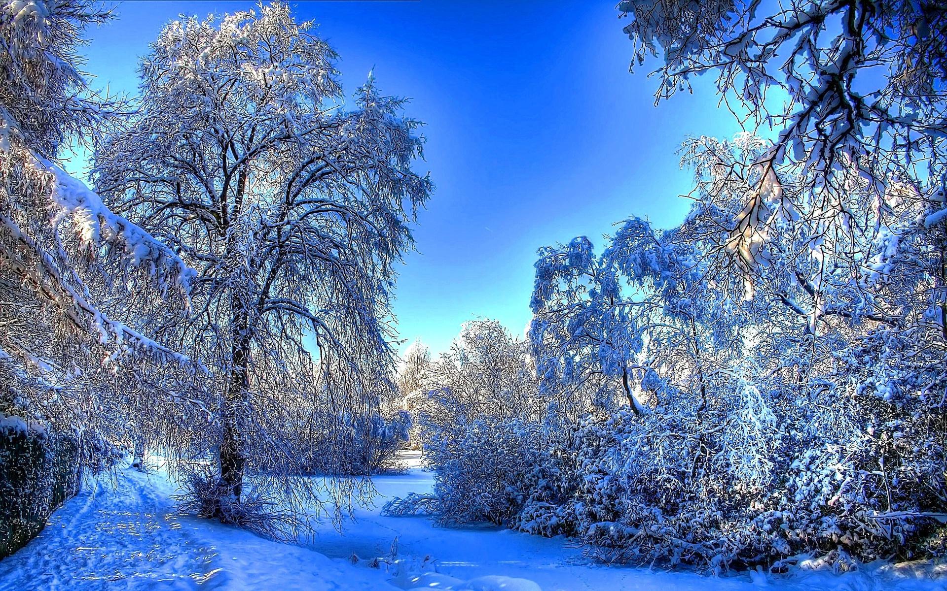 Зима для картинки, новым годом открытке