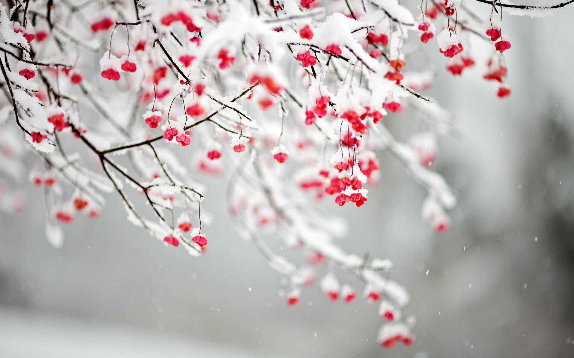 картинка на телефон первый снег киа