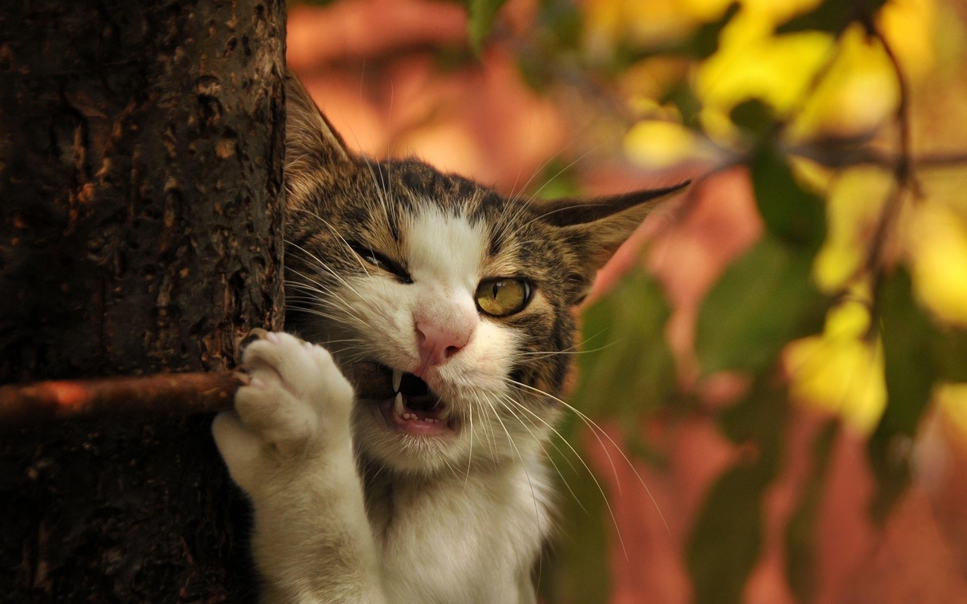 конечно, картинки на рабочий стол животные кошки смешные район