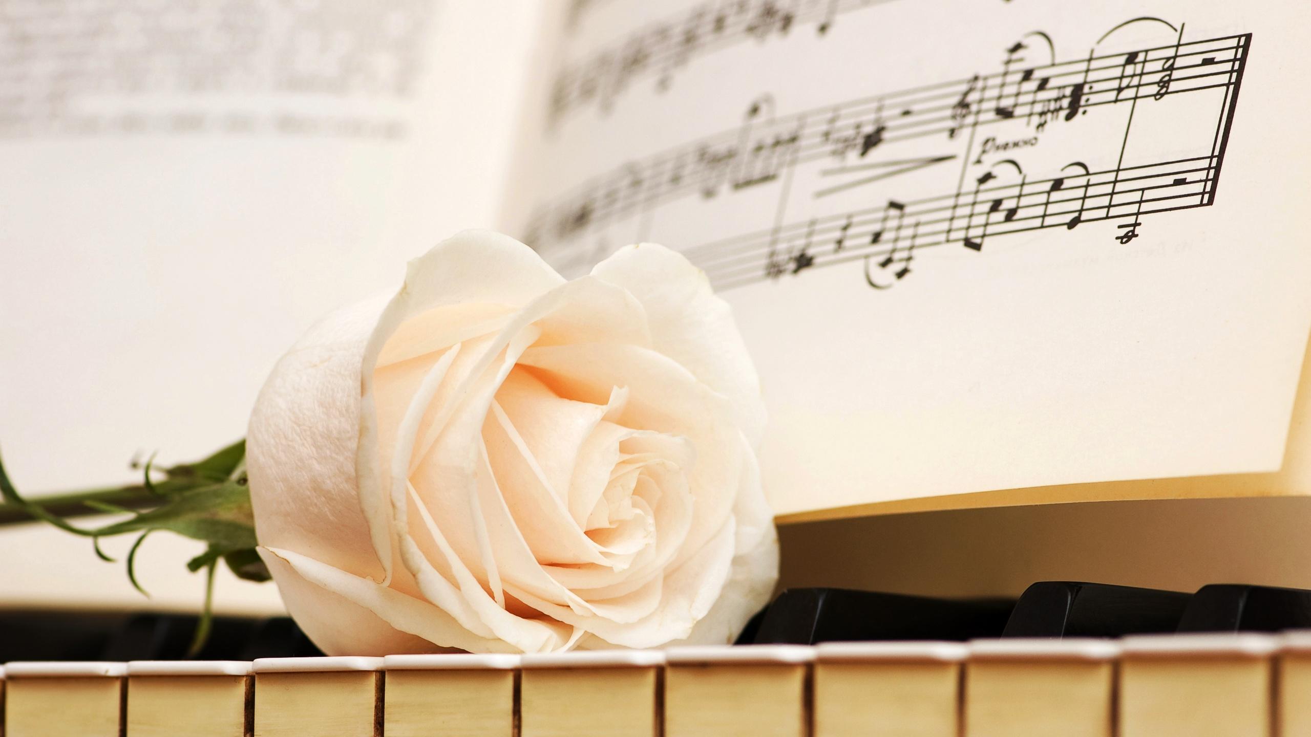картинка роза и пианино получили