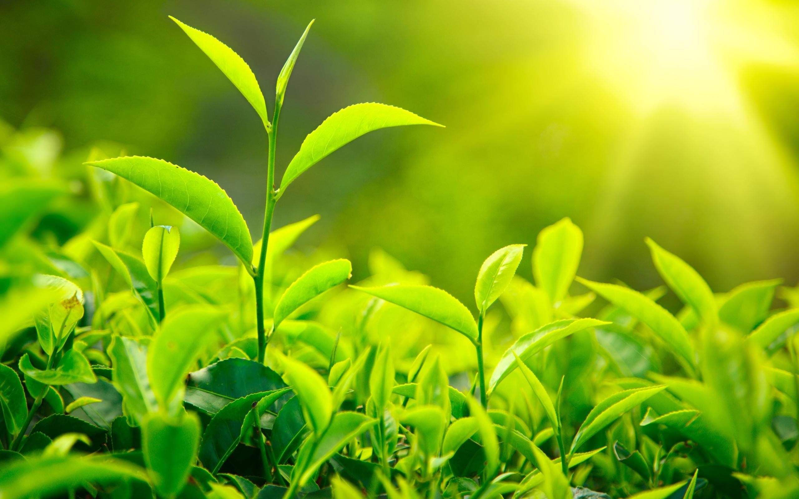 Картинки зеленый день