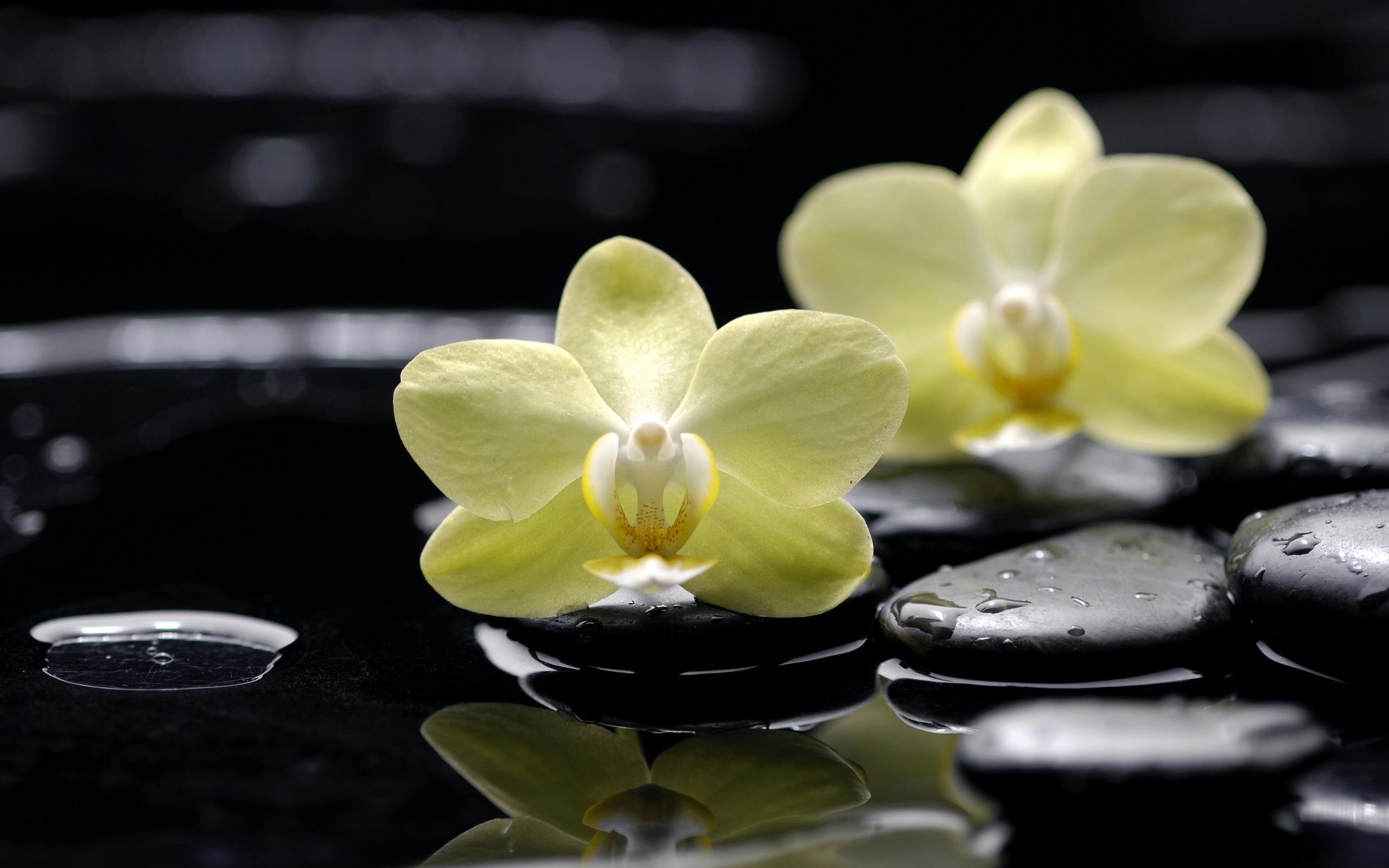 картинки для широкоформатной печати орхидея прямого рисунка