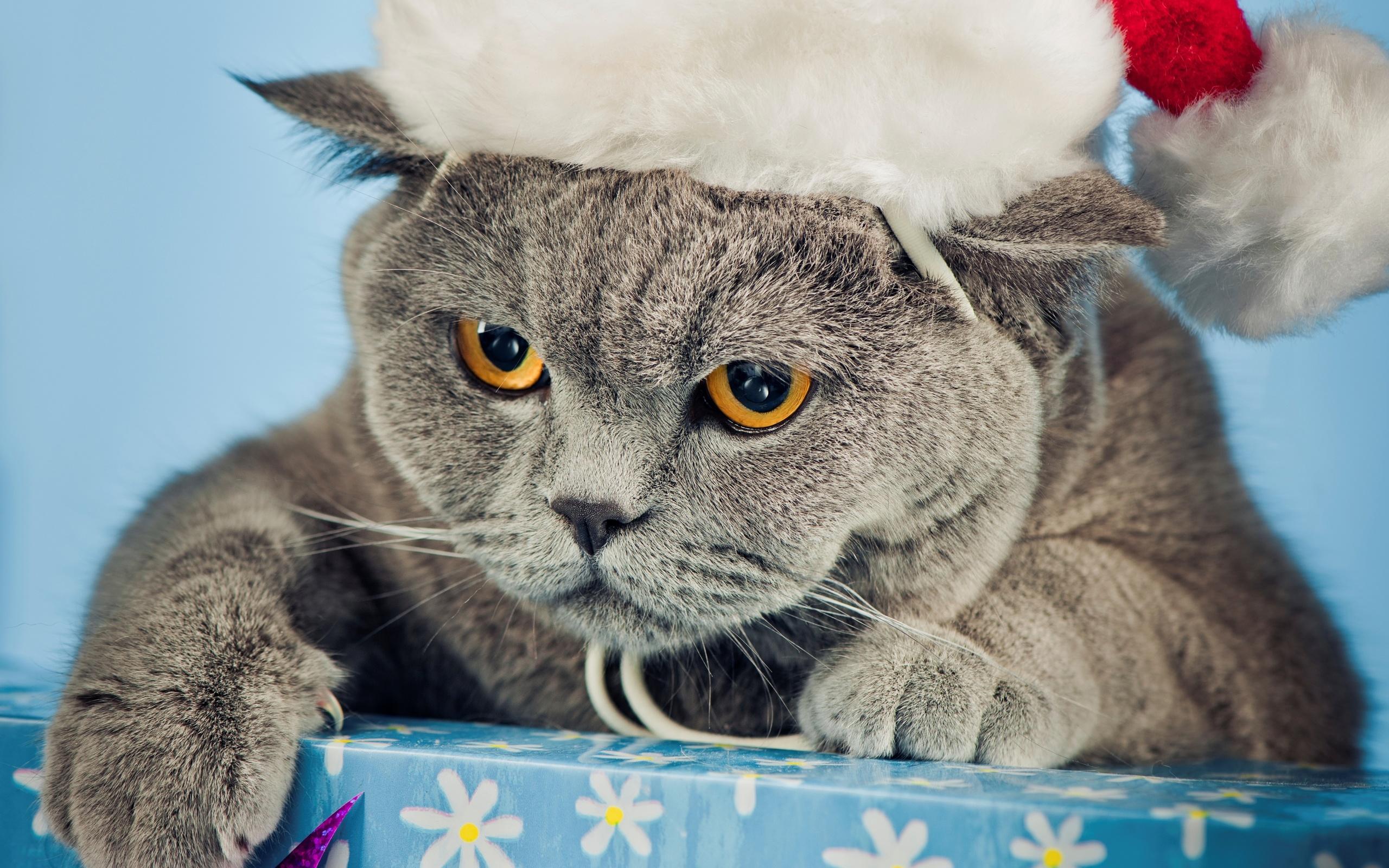 новые прикольные картинки котов лицее
