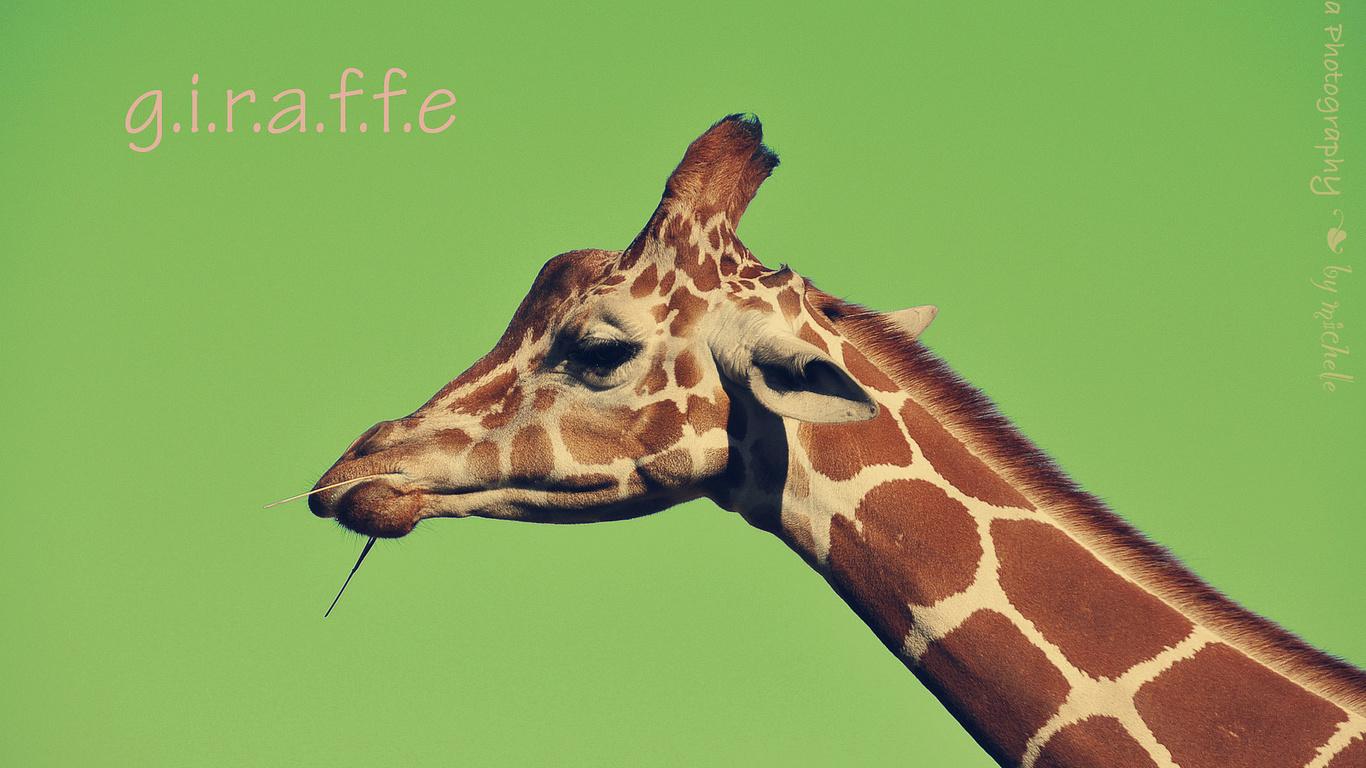 Жираф картинка с надписью