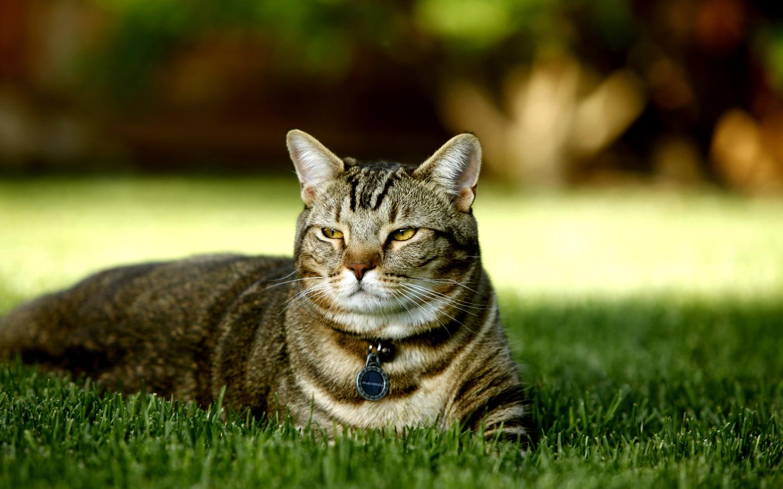 Про котов картинки