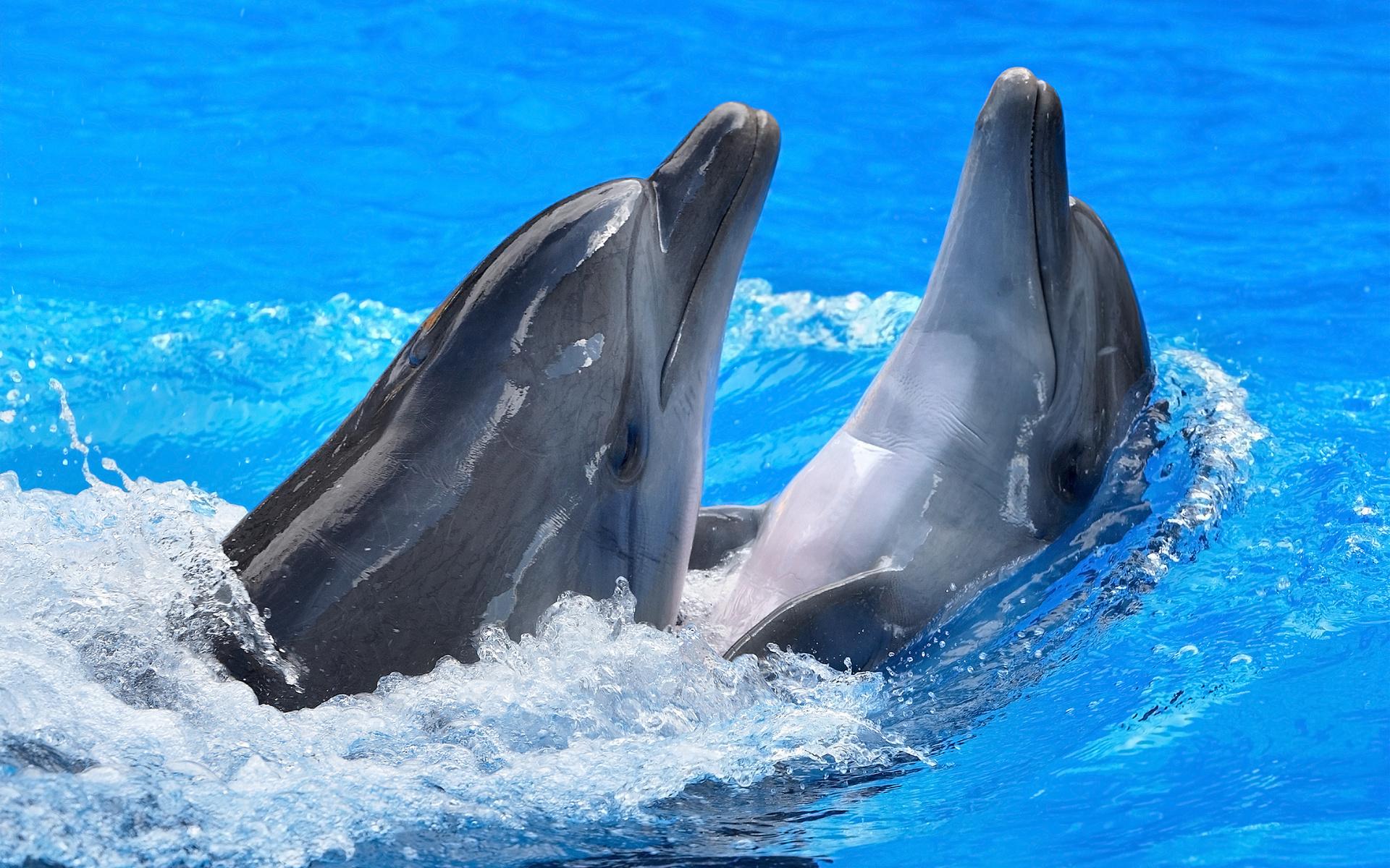 картинки дельфинов на весь экран уже двадцать лет