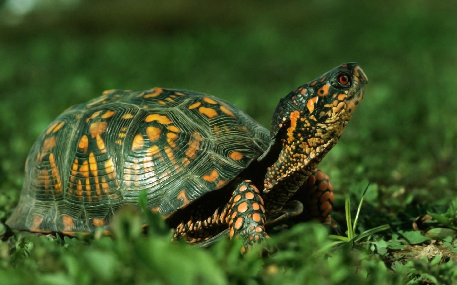 Картинки черепахи, добрым утром
