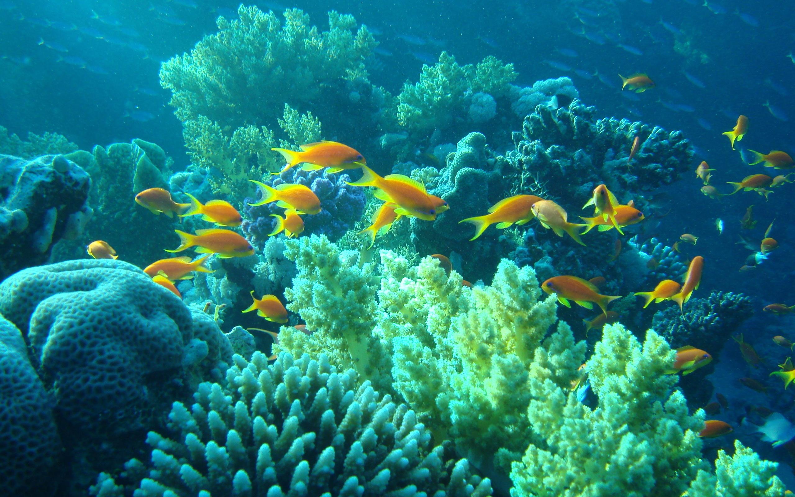 седьмой подводный мир фото красивое картинки одной
