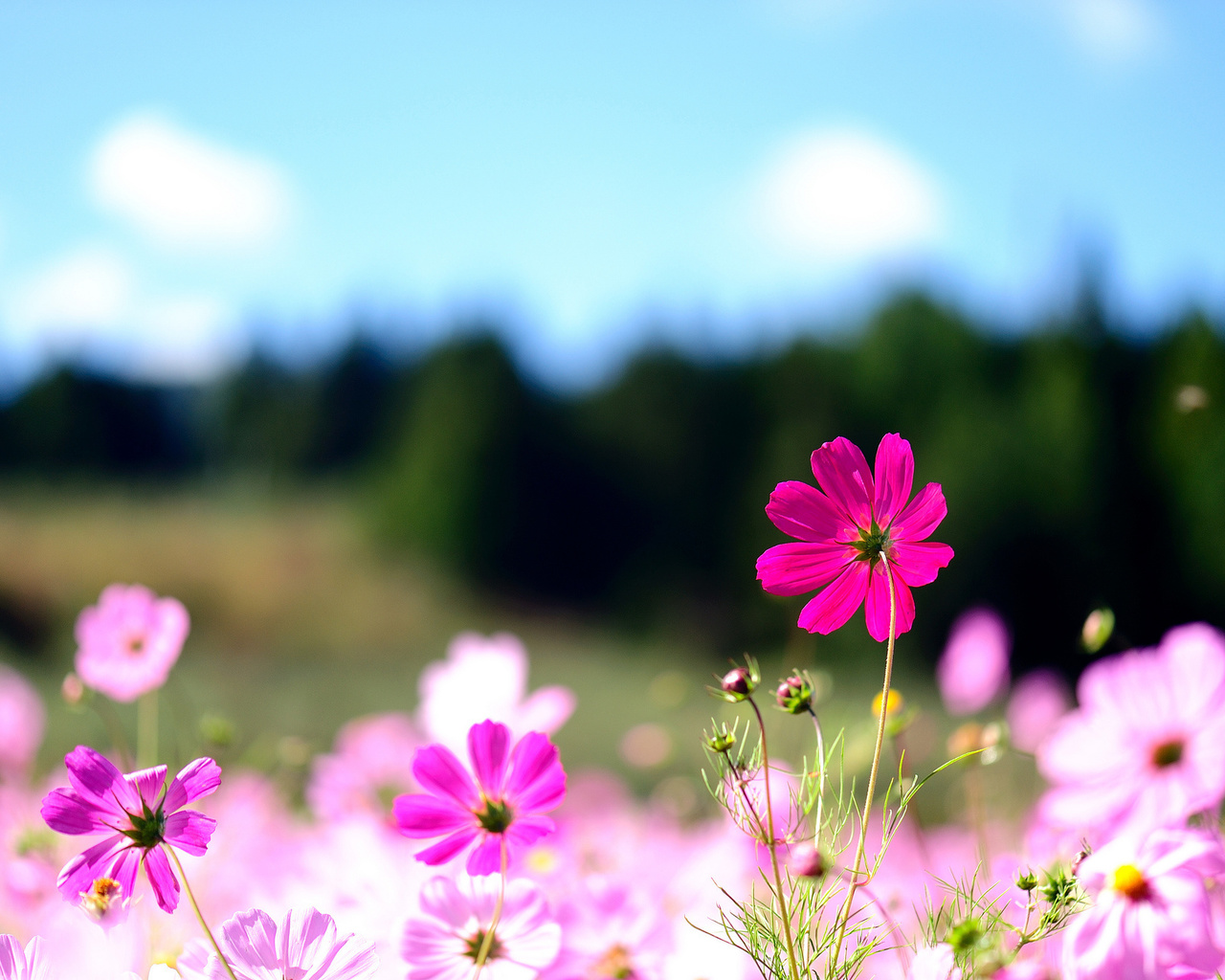 Картинки изображения лето