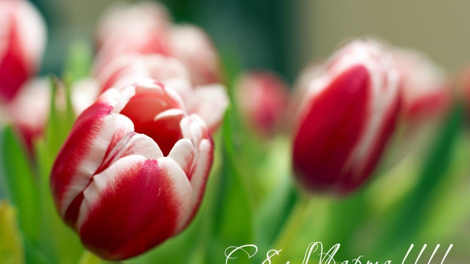 Фото, картинки и фото с 8 марта