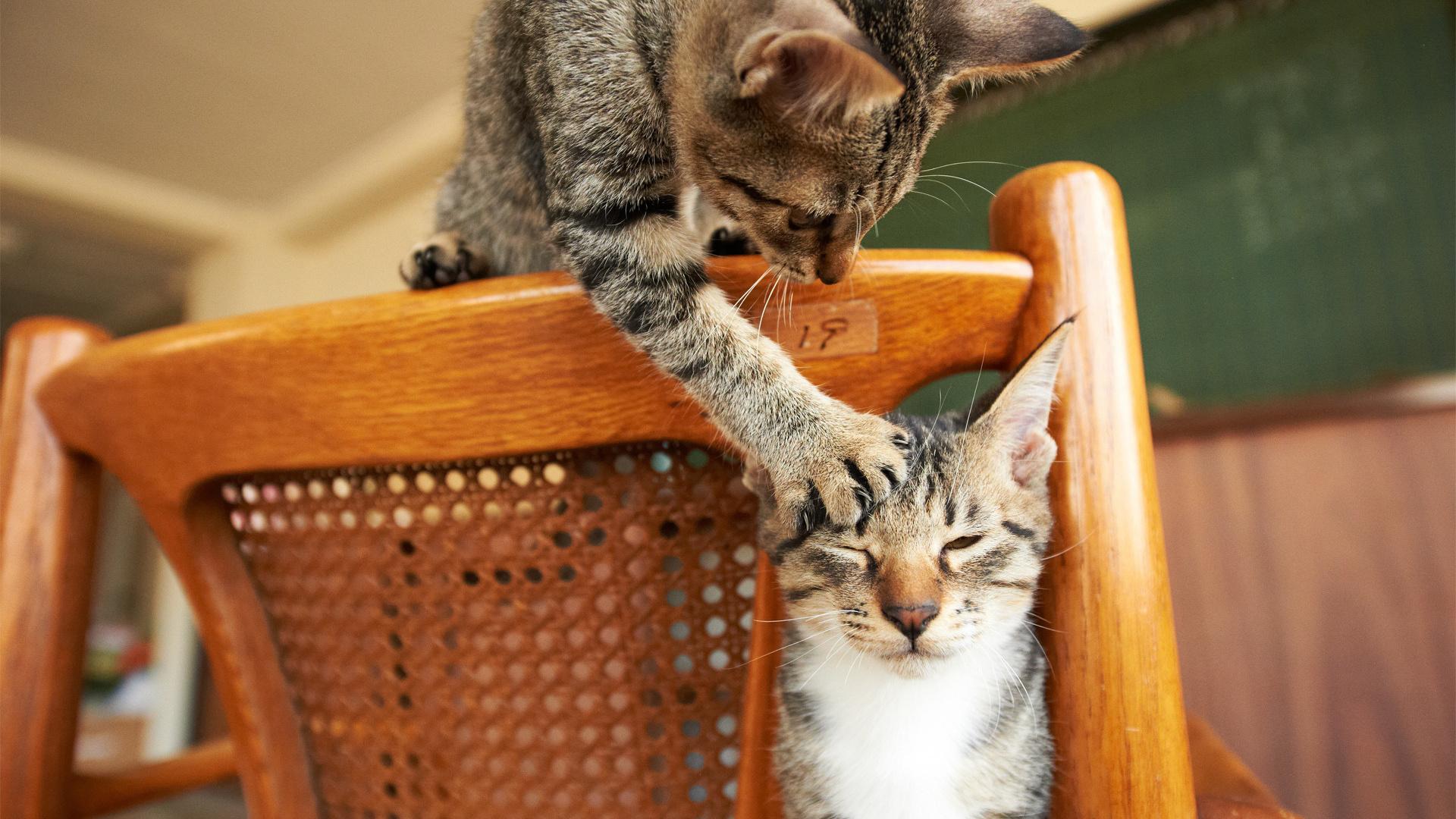 Картинки с кошками веселые