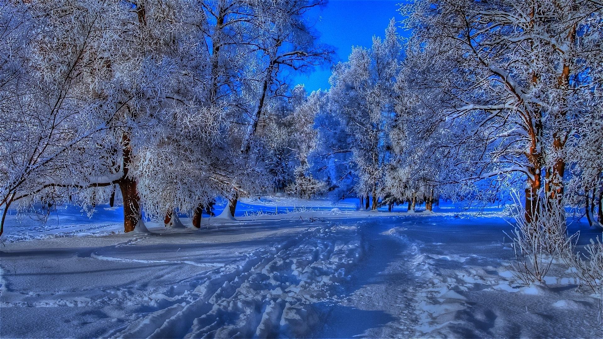 Яркие картинки зима высокого качества