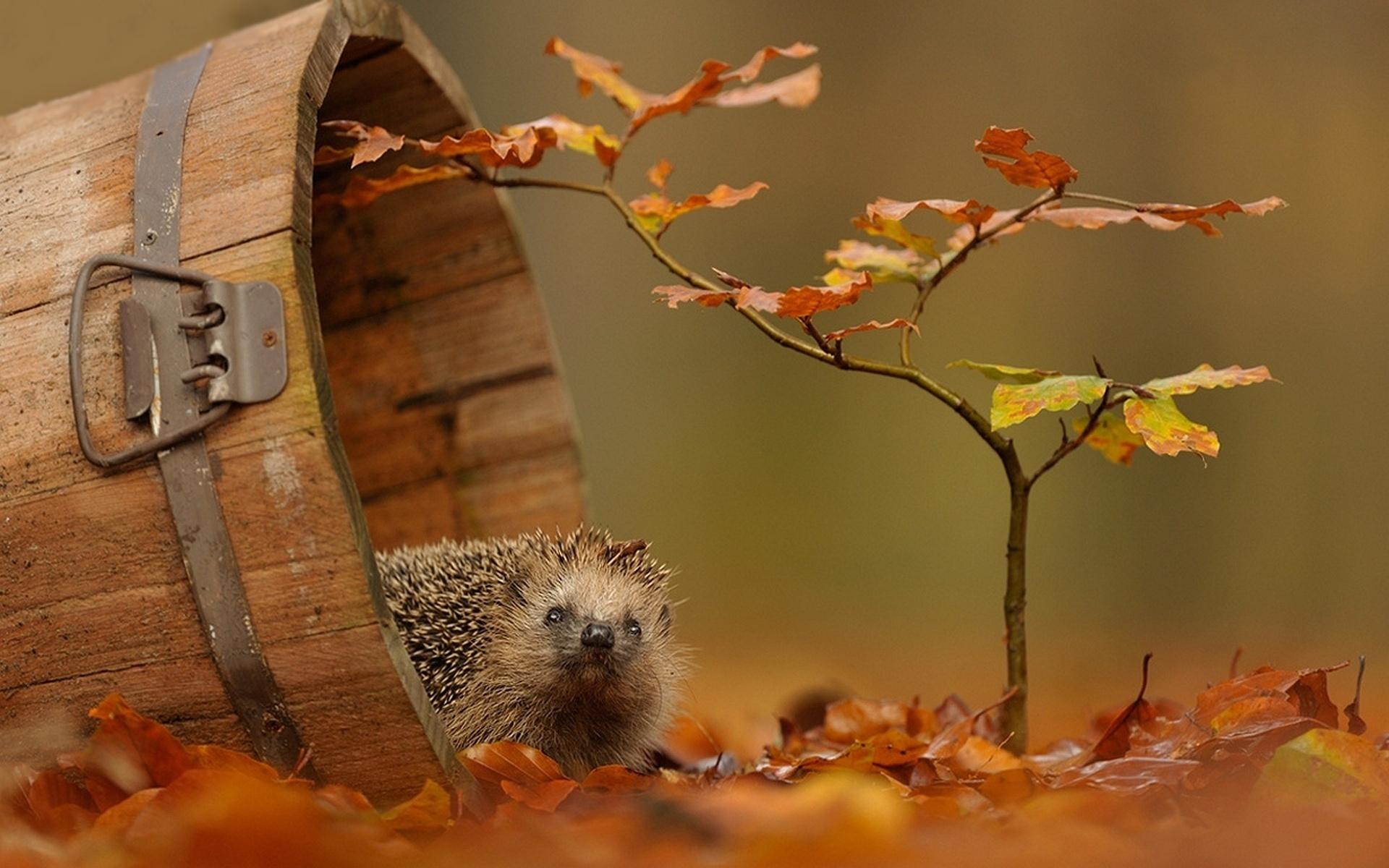 Осенние смешные картинки