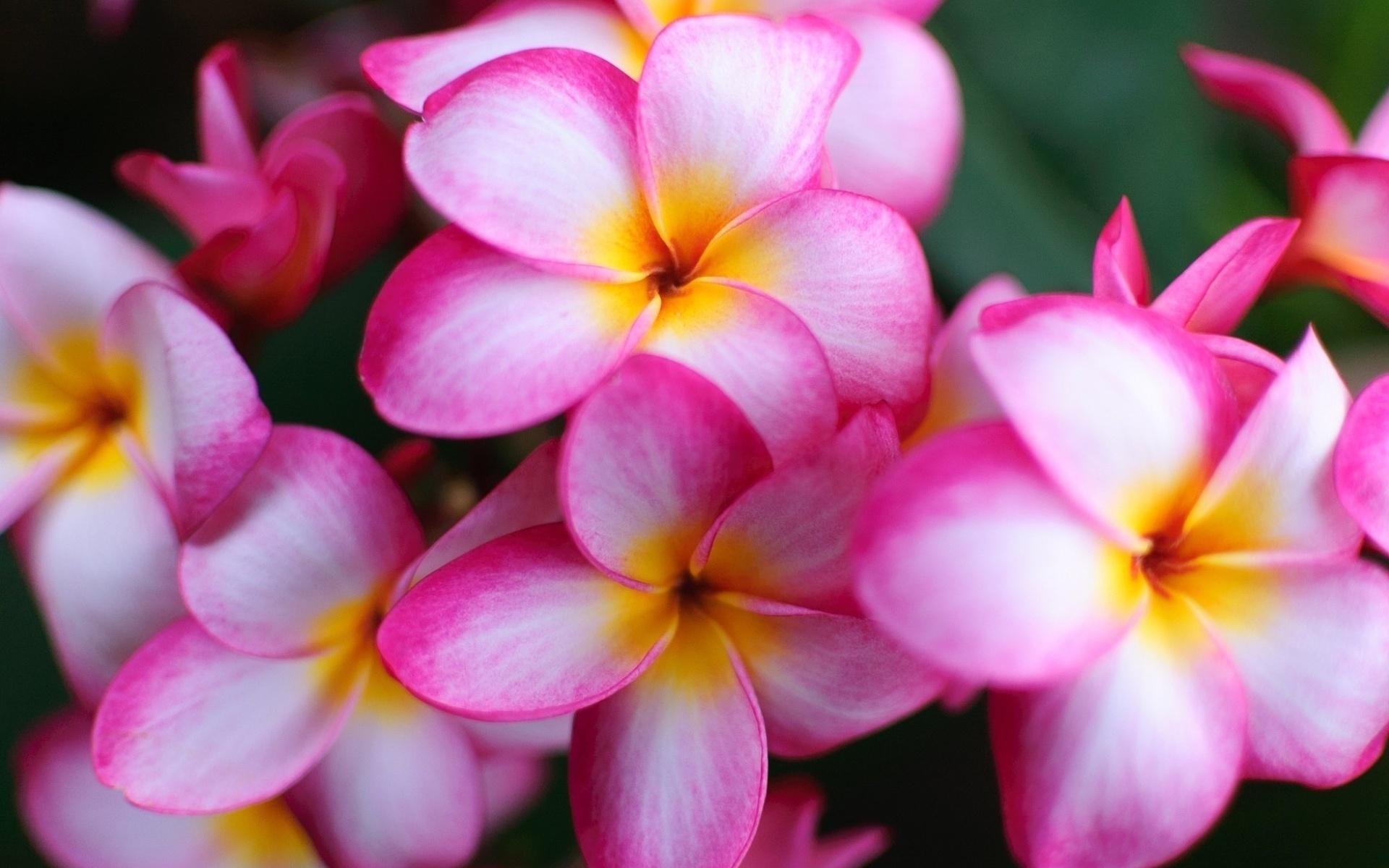 приходят вовремя, цветы картинки красивые большие размеры как диагноз встречается