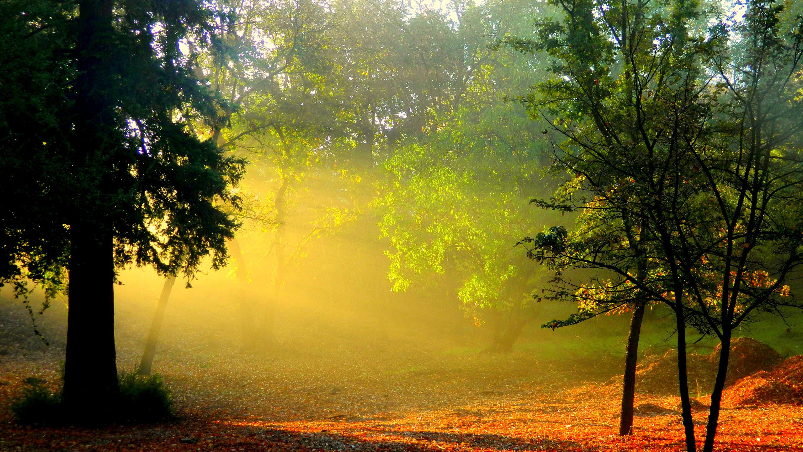 Картинки восход солнца в лесу
