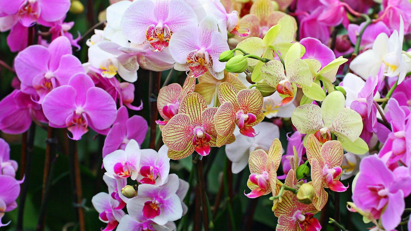 Красивые цветы картинки орхидеи, для