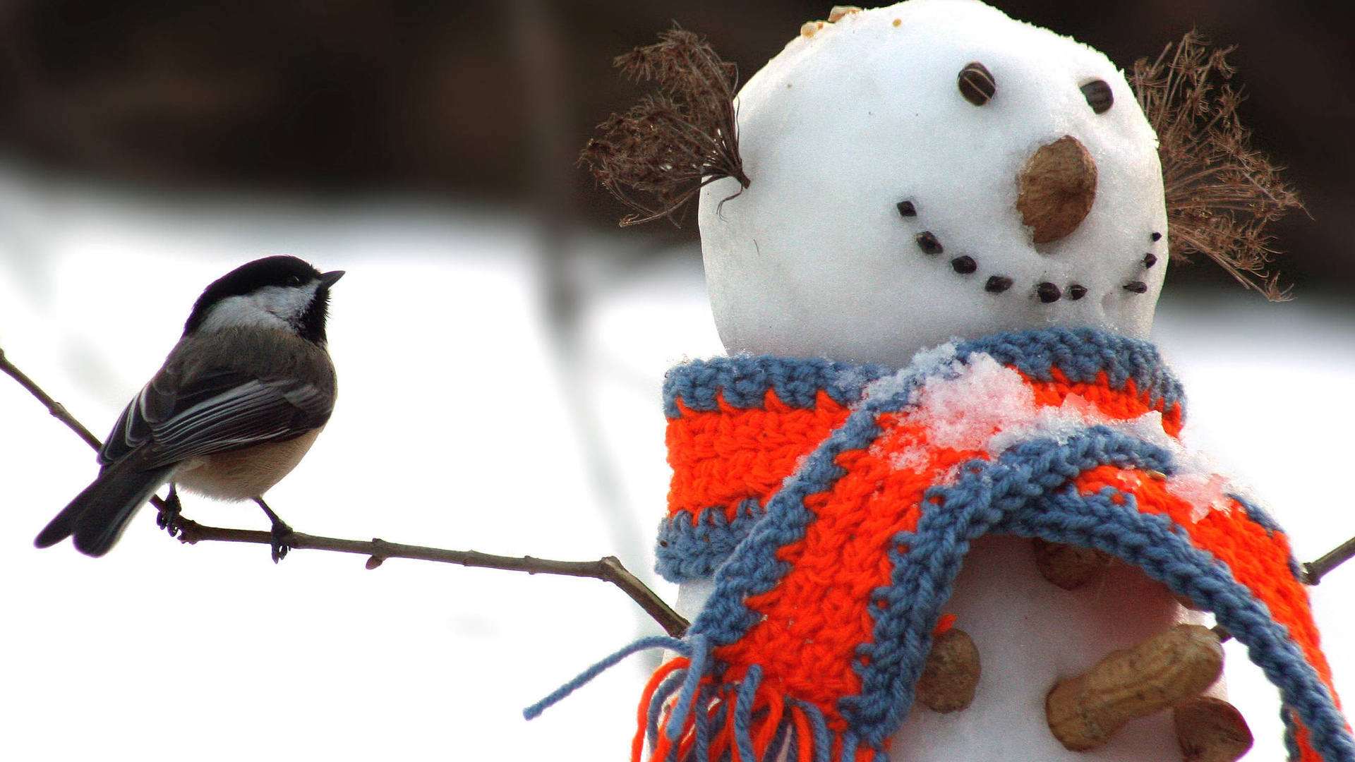 Прикольные картинки зима, открытка