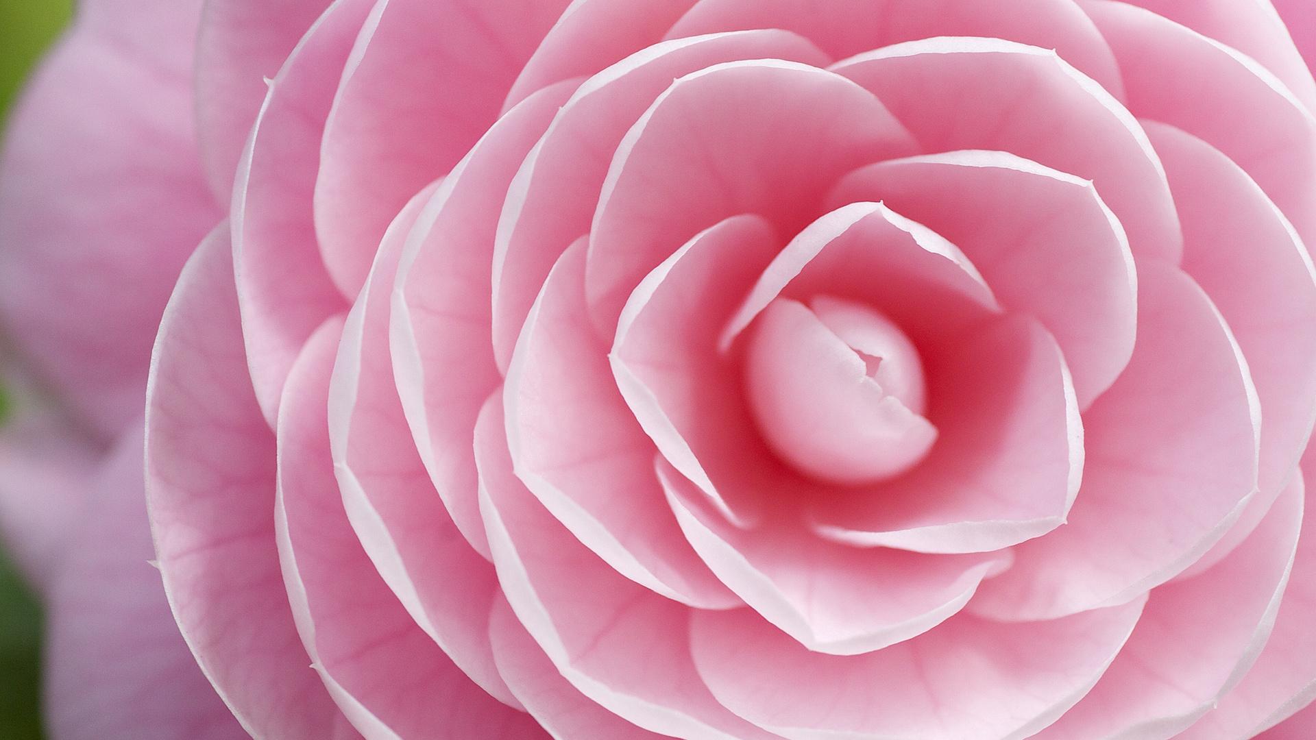 Мужчине лет, показать картинки красивые цветы
