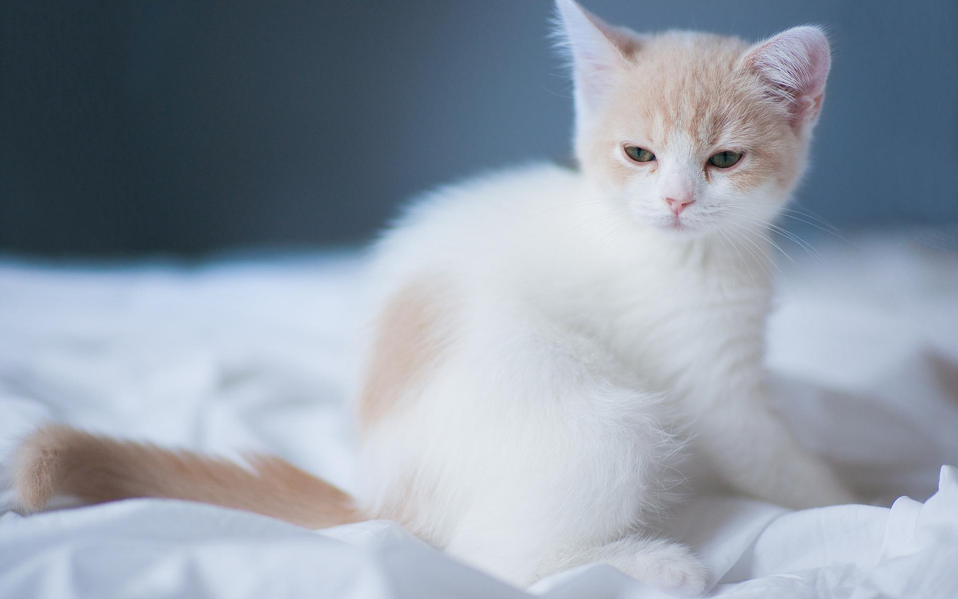 картинки светлых котят образом обеспечивается