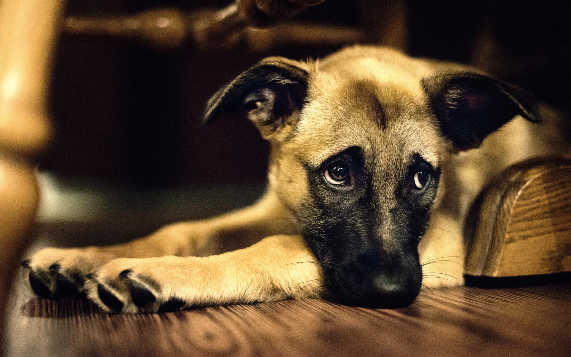 грустный щенок картинки буфете