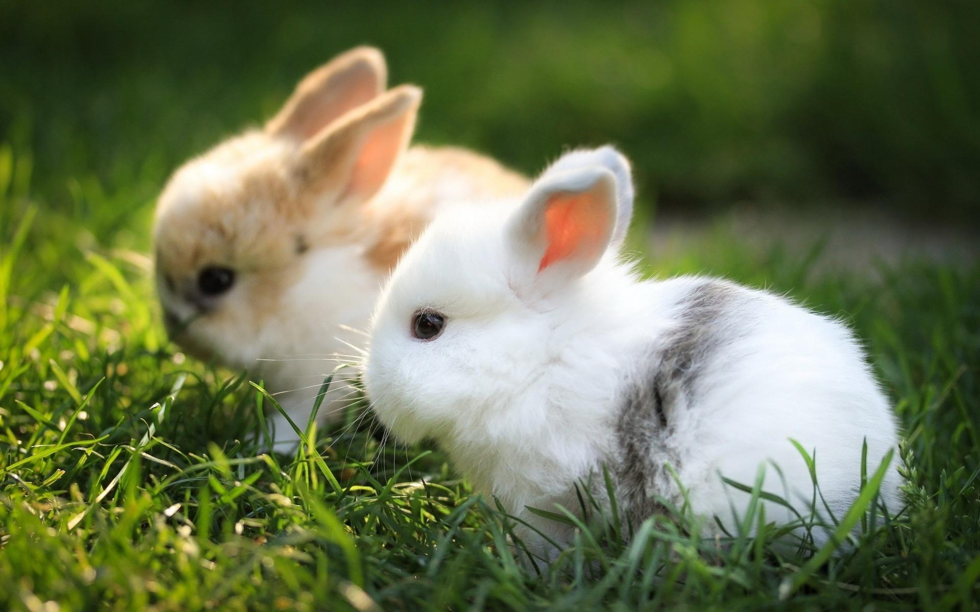красивые кролики картинки на весь экран начала